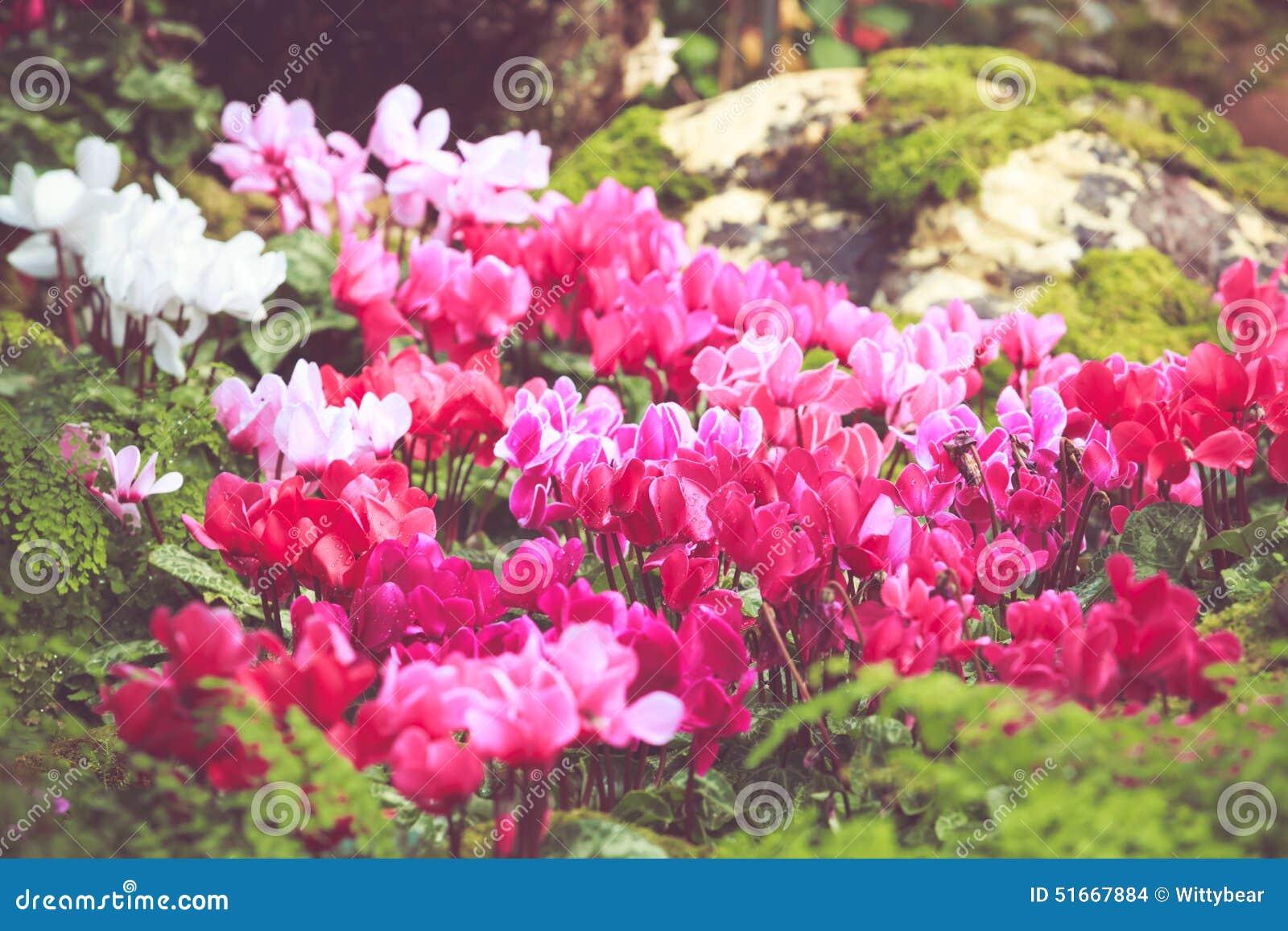 Petite Fleur Colorée De Fleur Dans Le Jardin Avec Le Rétro ...
