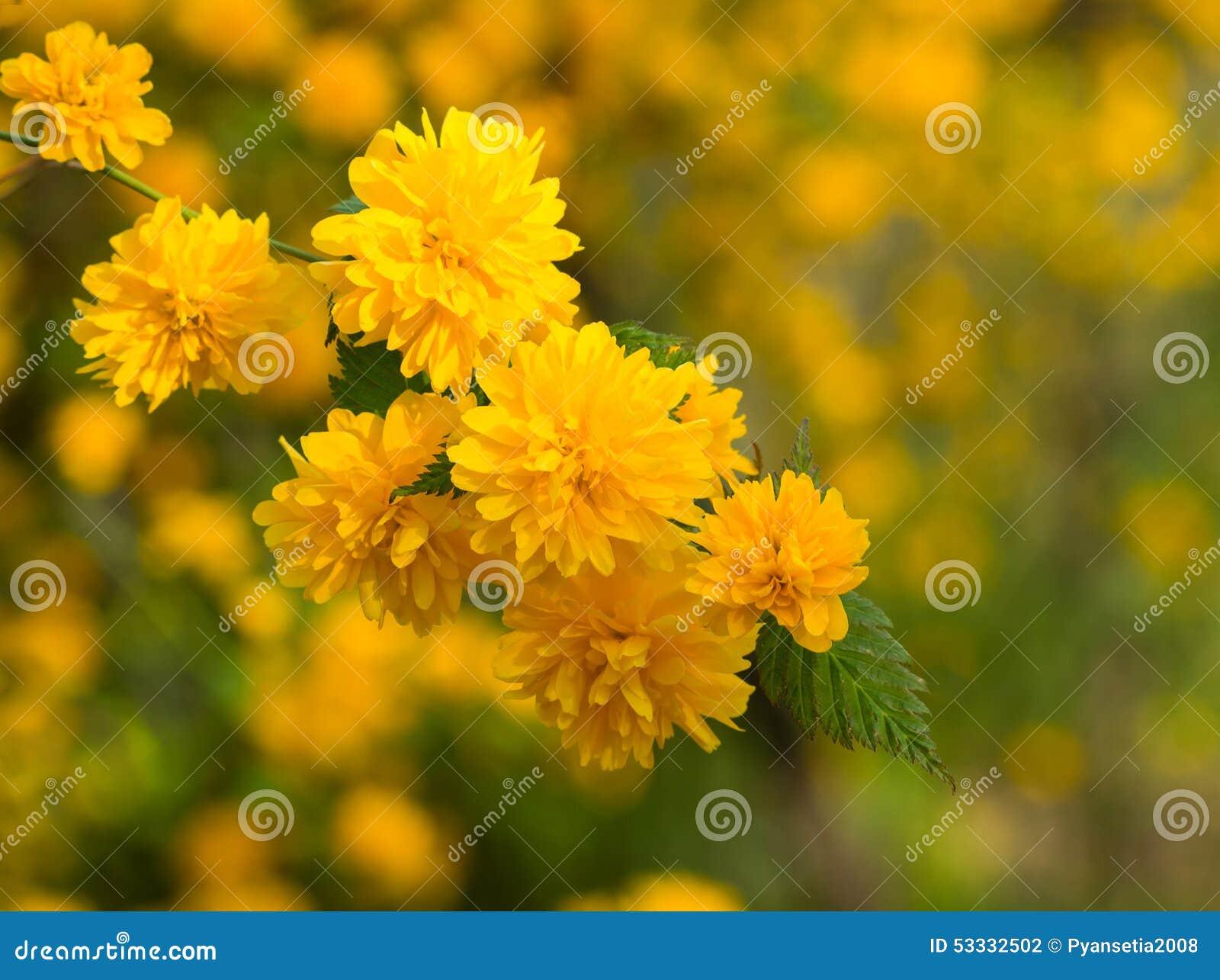 petite fleur jaune de fleurs au printemps photo stock image du centrale nature 53332502. Black Bedroom Furniture Sets. Home Design Ideas