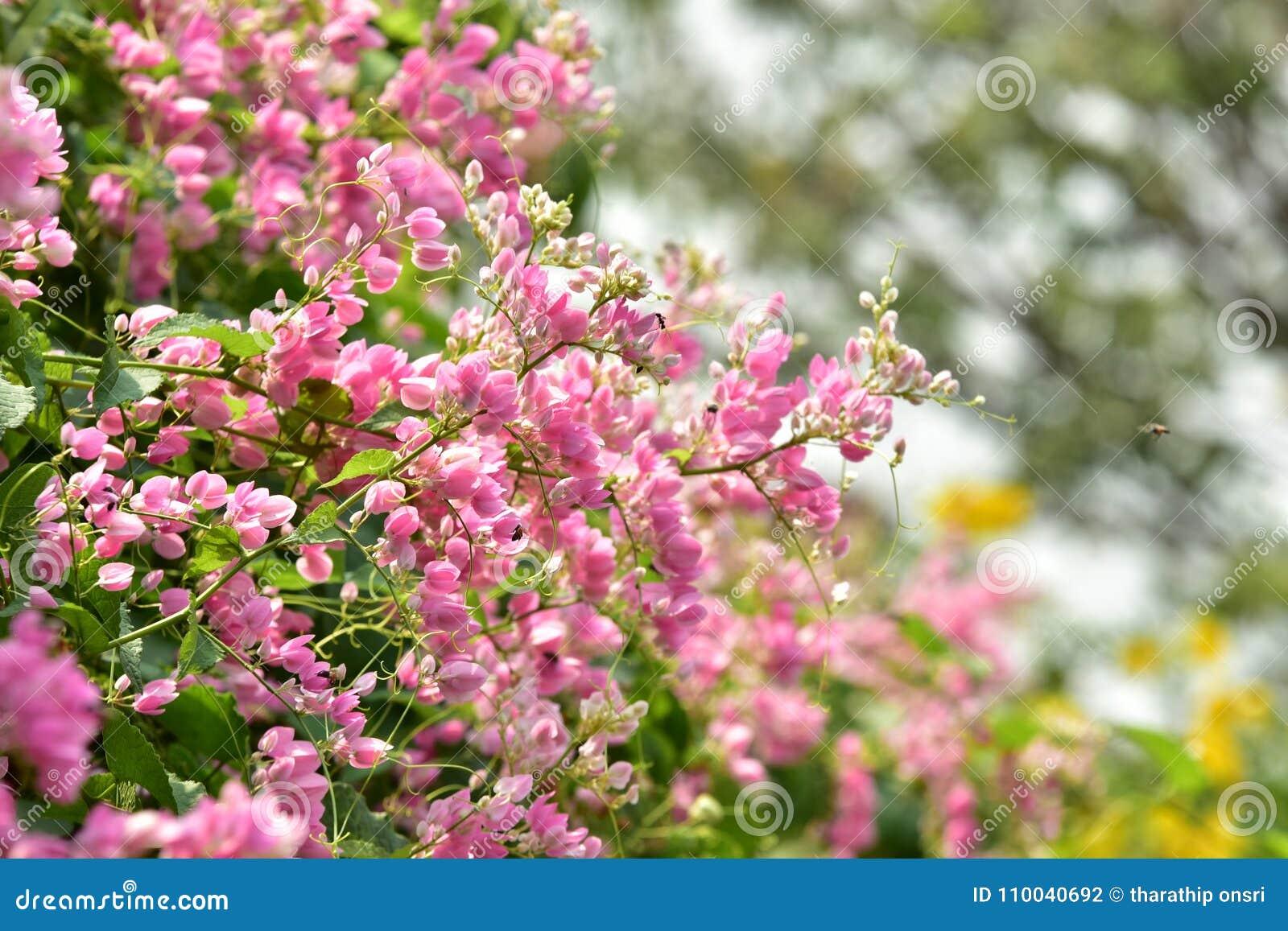 Petite Fleur Rose De Fleur Sur Son Arbre Dans Le Printemps Photo