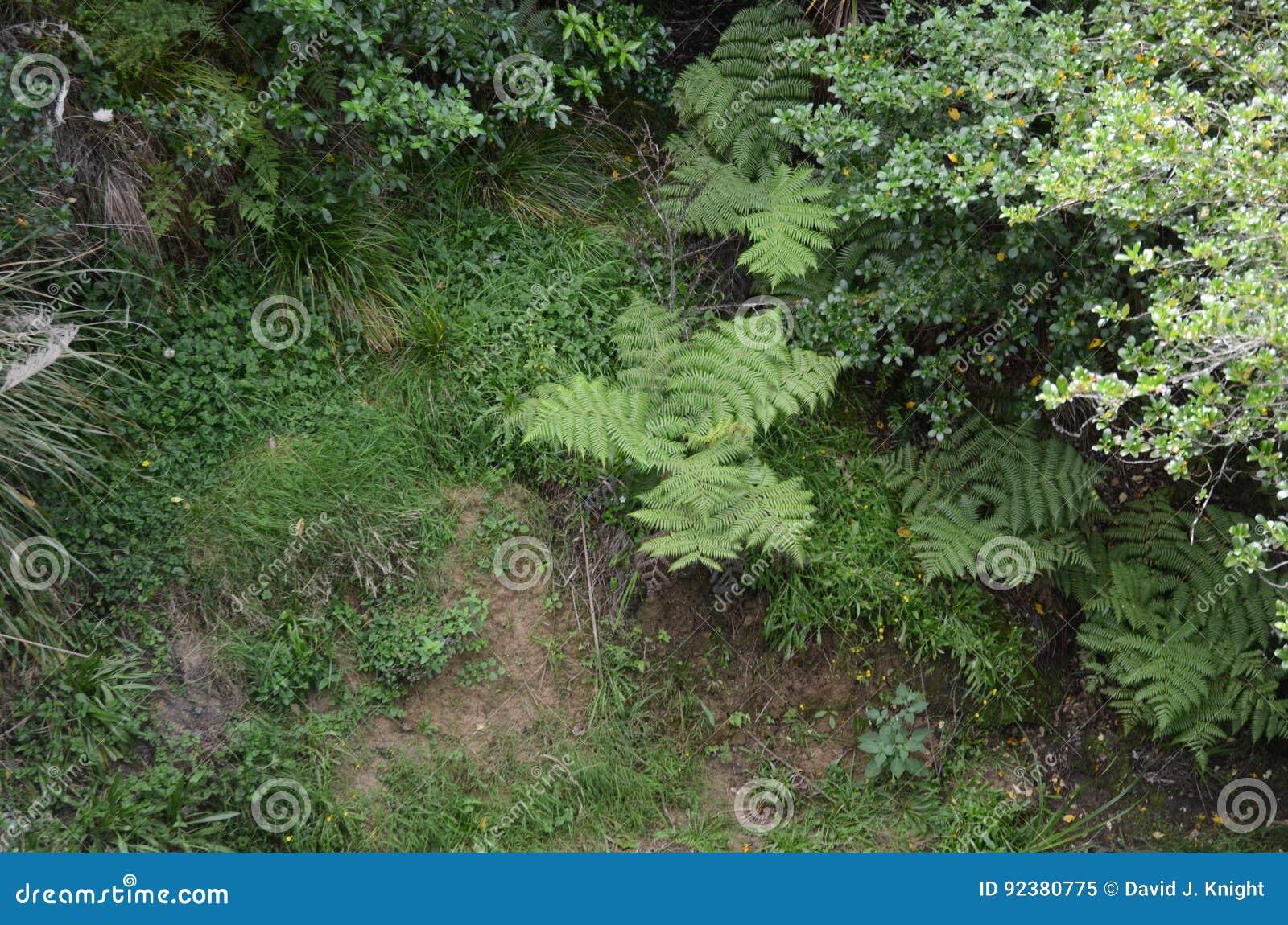 petite fougère d'arbre en kiwi bush image stock - image du petit