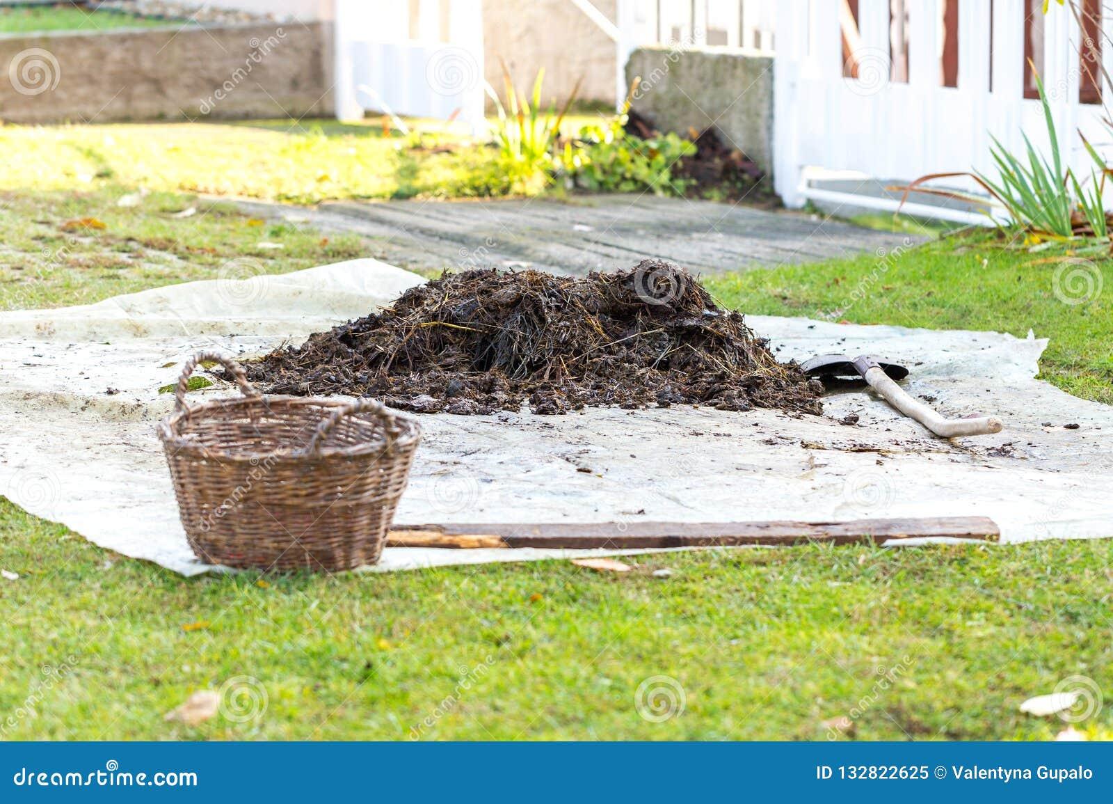 Petite pile d engrais décomposé sur la bâche dans la cour Pelle et panier à jardin près de tas Concept de l agriculture biologiqu