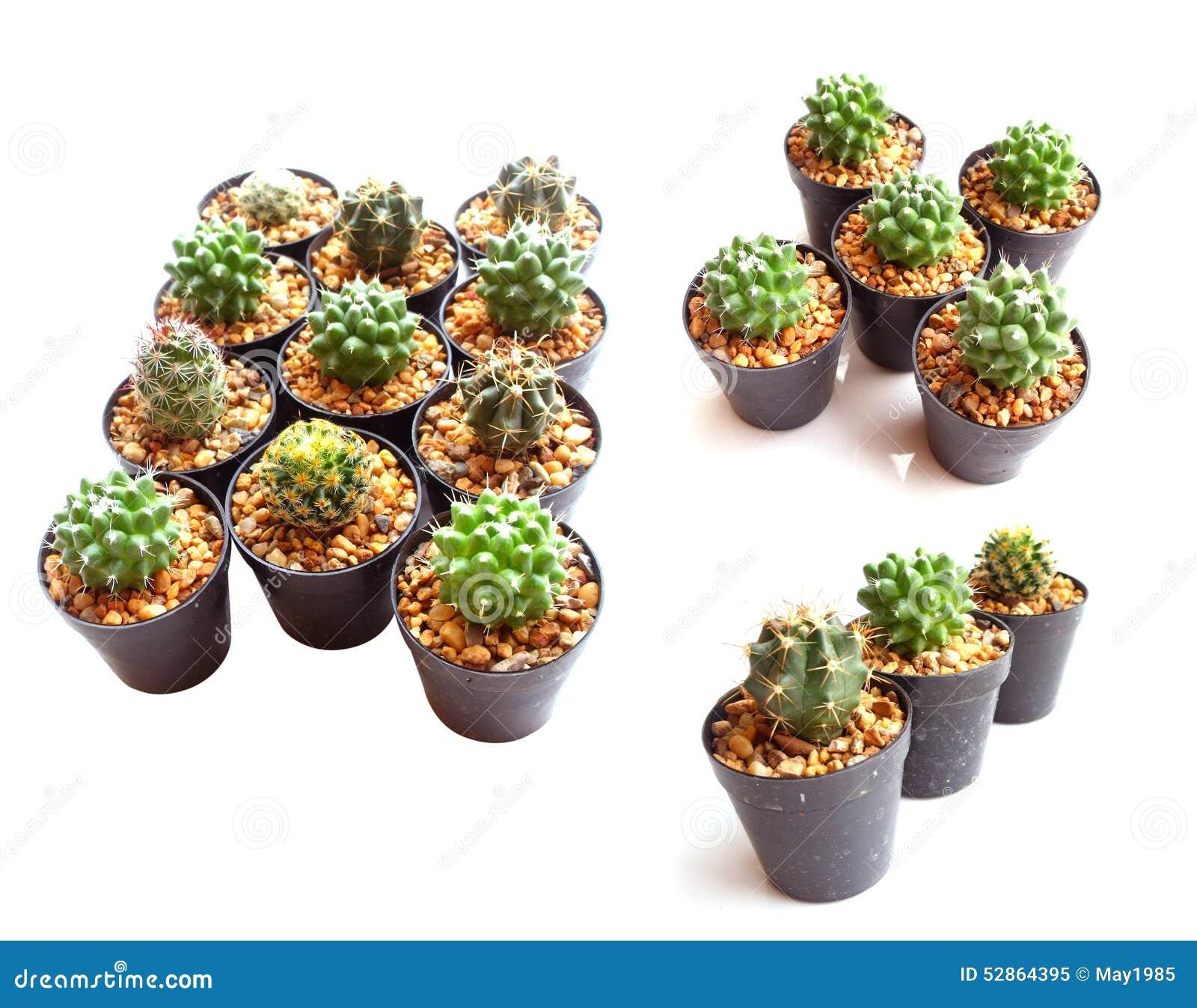 Attractive petite plante d interieur 6 plante for Petite plante interieur