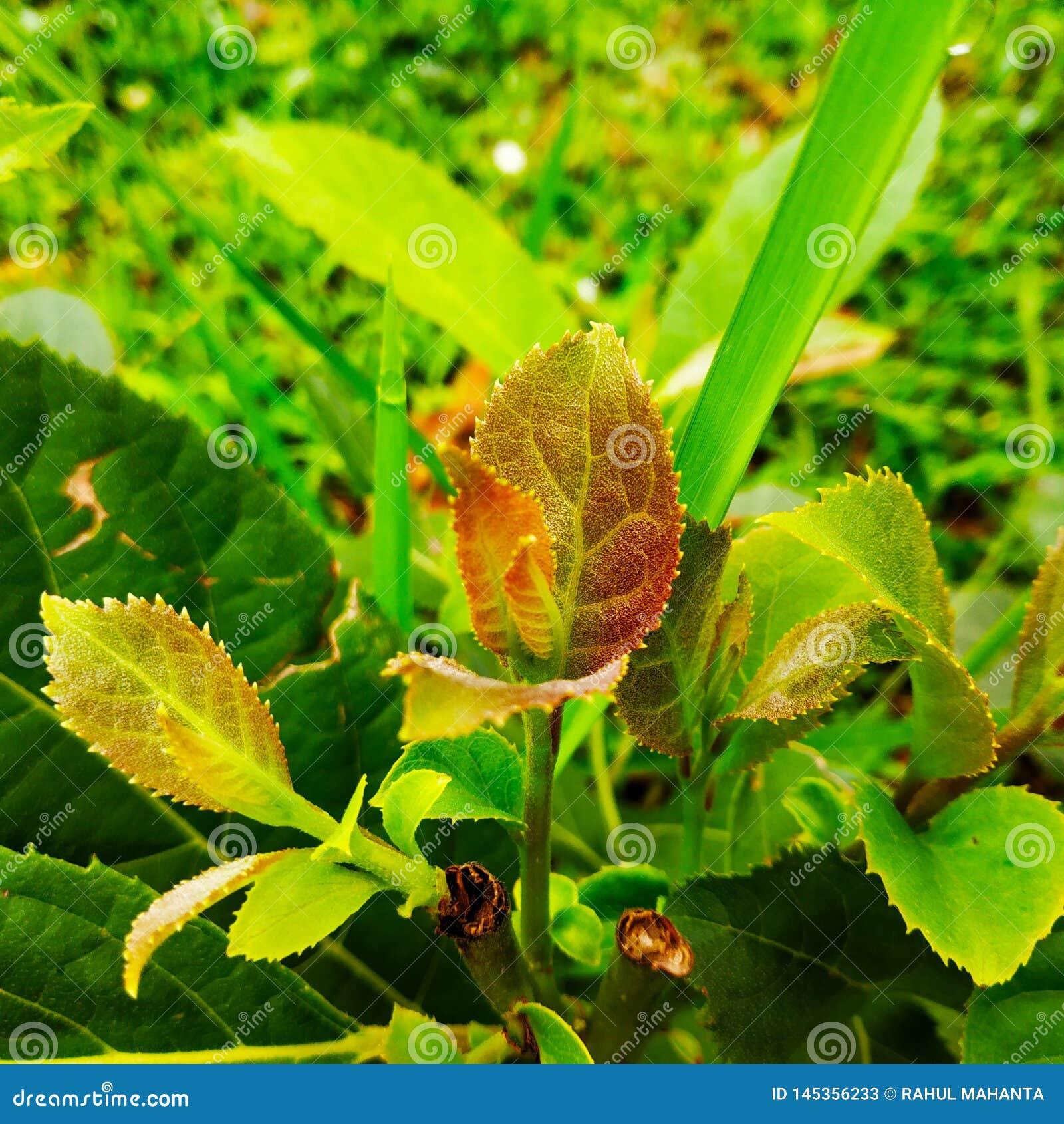 Petite plante verte
