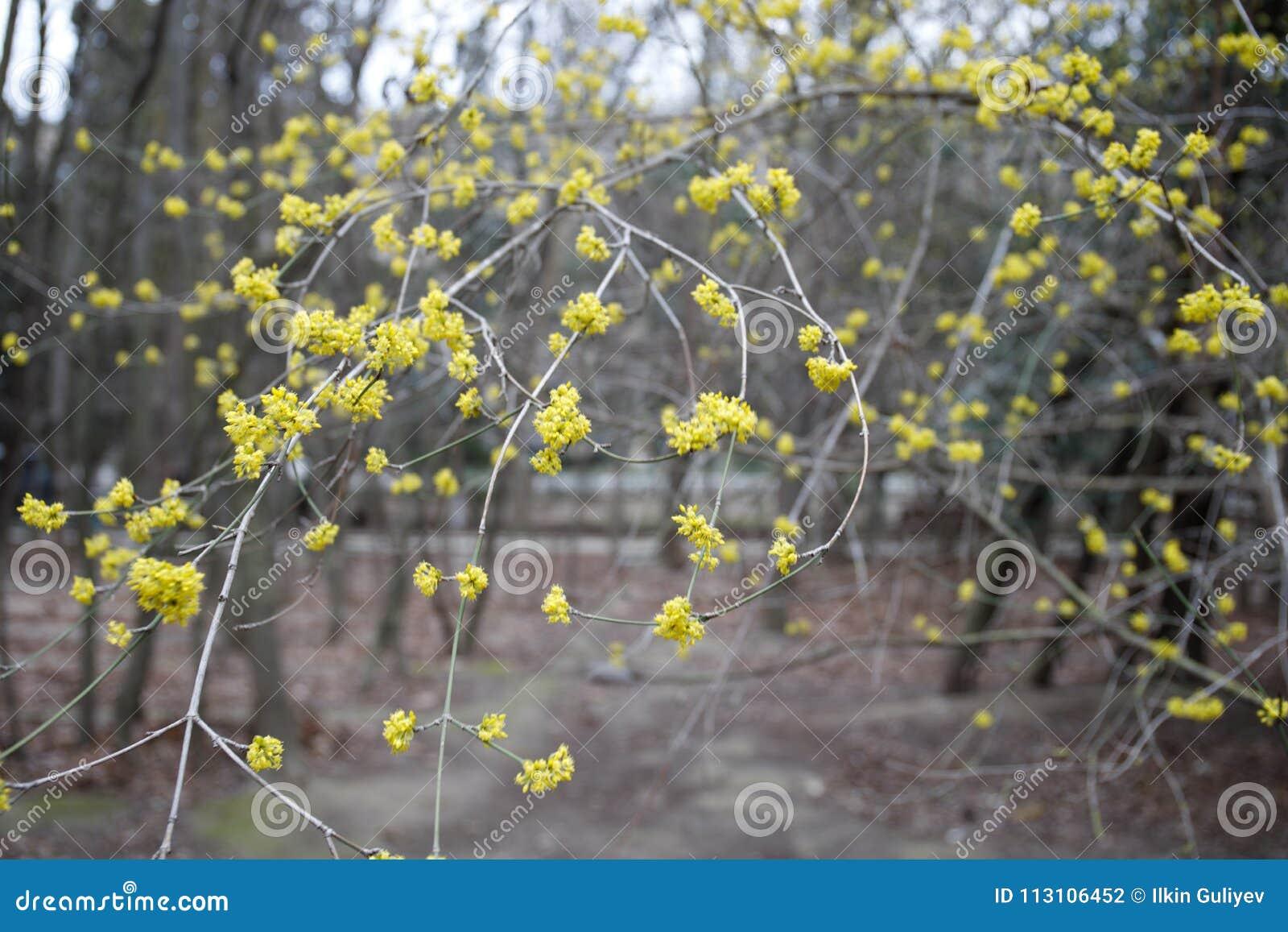 Petites Fleurs Blanches Le Temps D Arbre Au Printemps Image De Plan