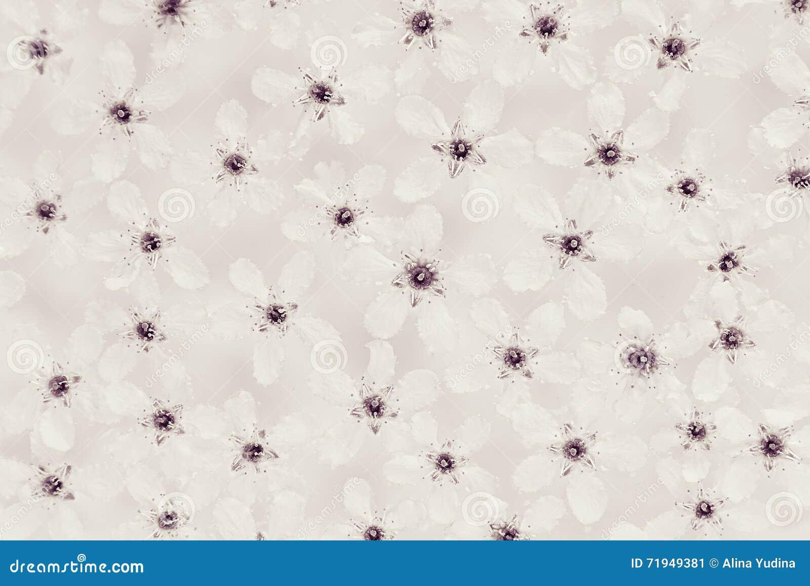 Petites fleurs blanches sur l eau dessus Noir et blanc, sépia Configuration florale Mariage, fond de ressort Macro