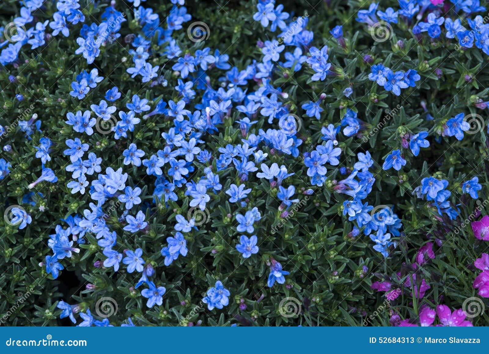 petites fleurs bleues image stock image du groupe vert 52684313. Black Bedroom Furniture Sets. Home Design Ideas