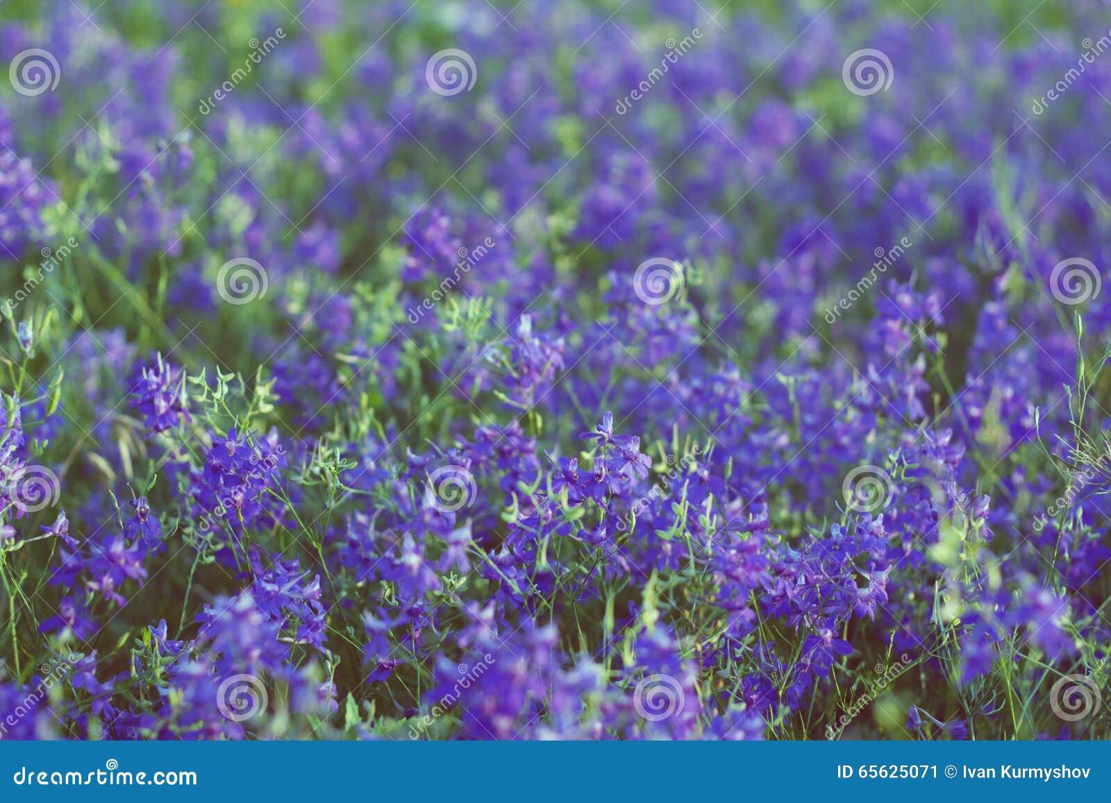 Petites fleurs violettes dans le jardin à l été