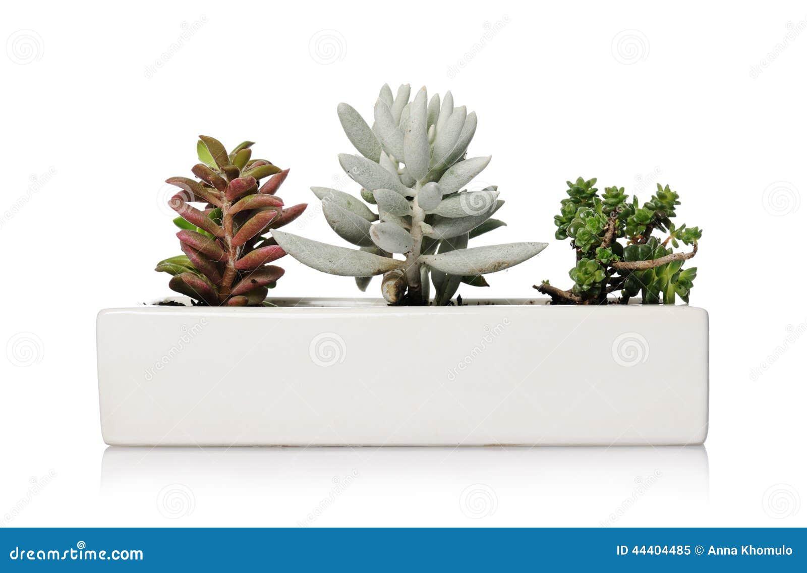 petite plante d interieur. Black Bedroom Furniture Sets. Home Design Ideas