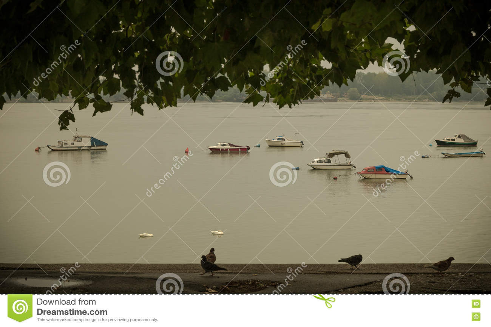 Petits bateaux de pêche