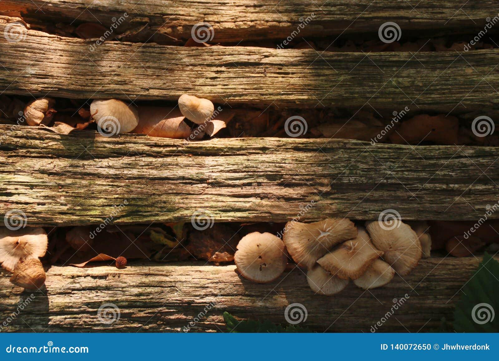 Petits champignons s élevant en fissures de tronc d arbre