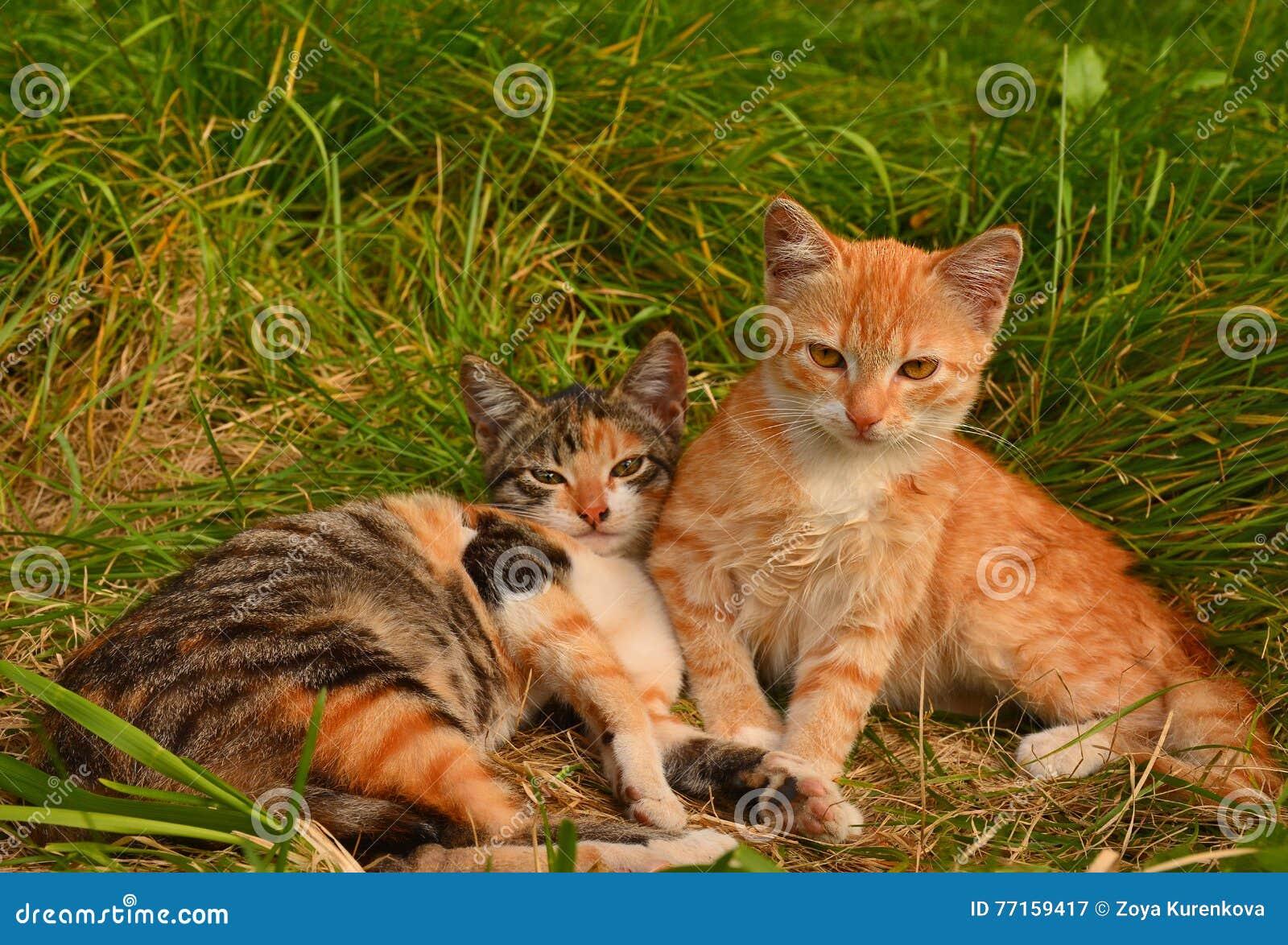Petits chatons