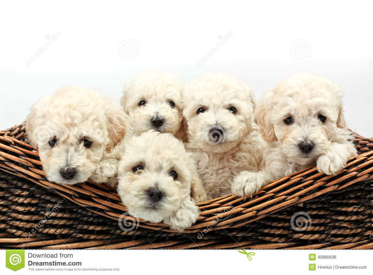 petits chiens mignons dans un panier en bois photo stock image 40885636. Black Bedroom Furniture Sets. Home Design Ideas