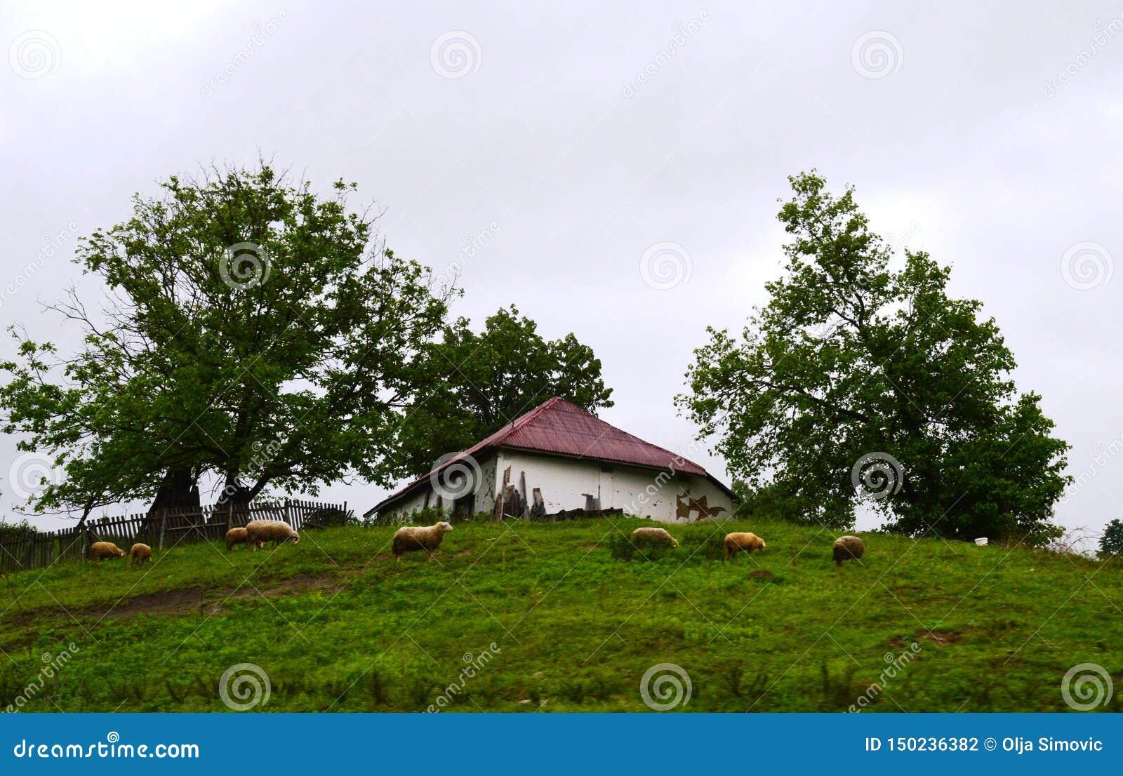 Petits vieux maison et moutons