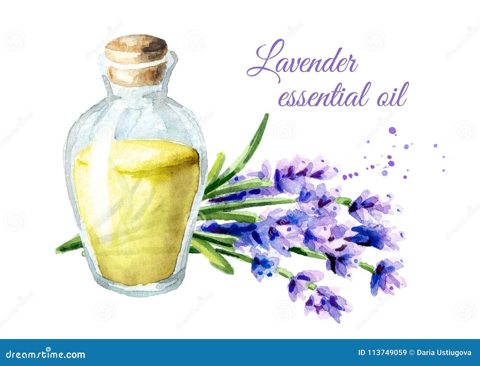 Petróleo esencial de la lavanda Ejemplo dibujado mano de la acuarela, aislado en el fondo blanco