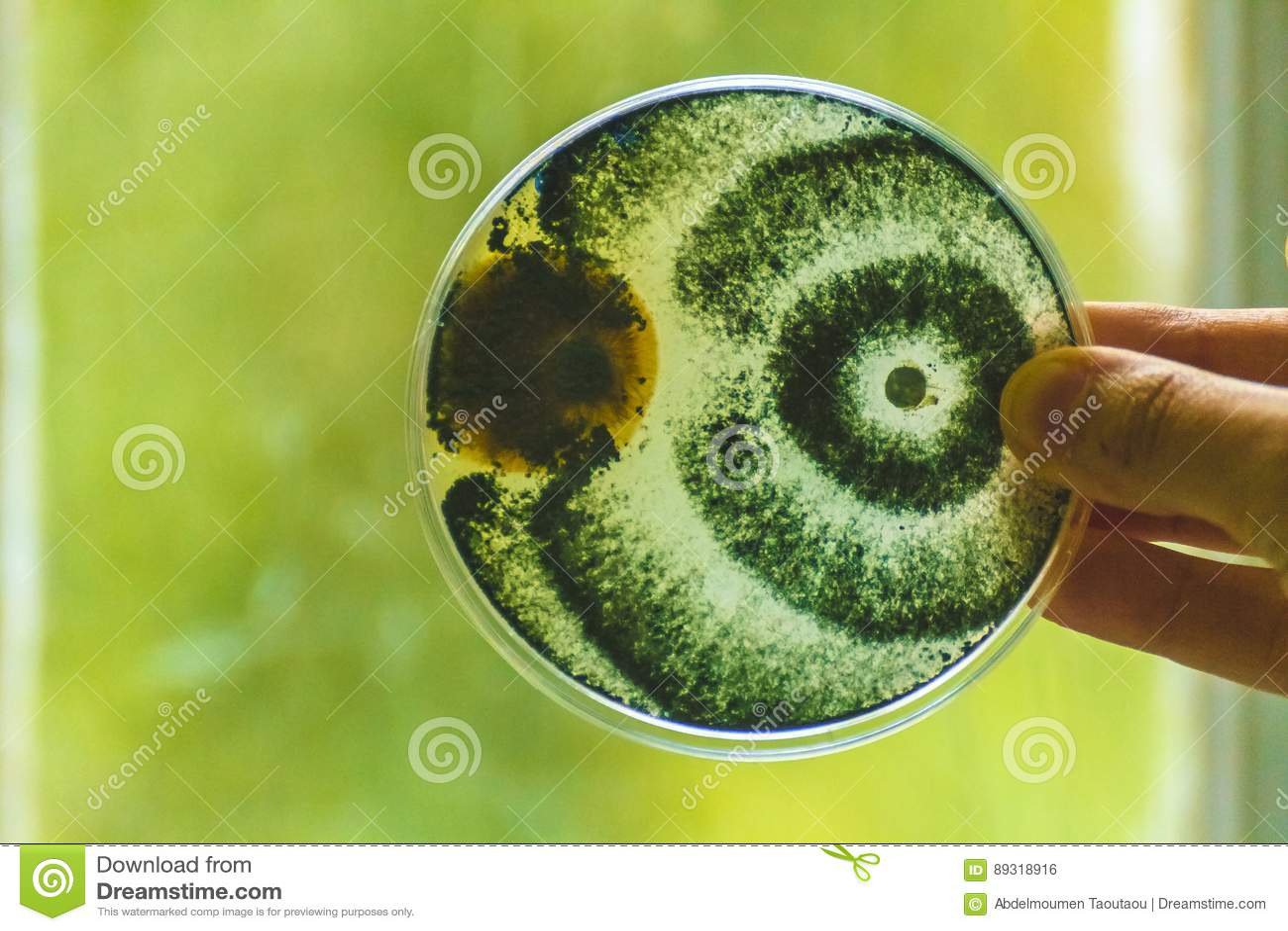 Petri naczynia