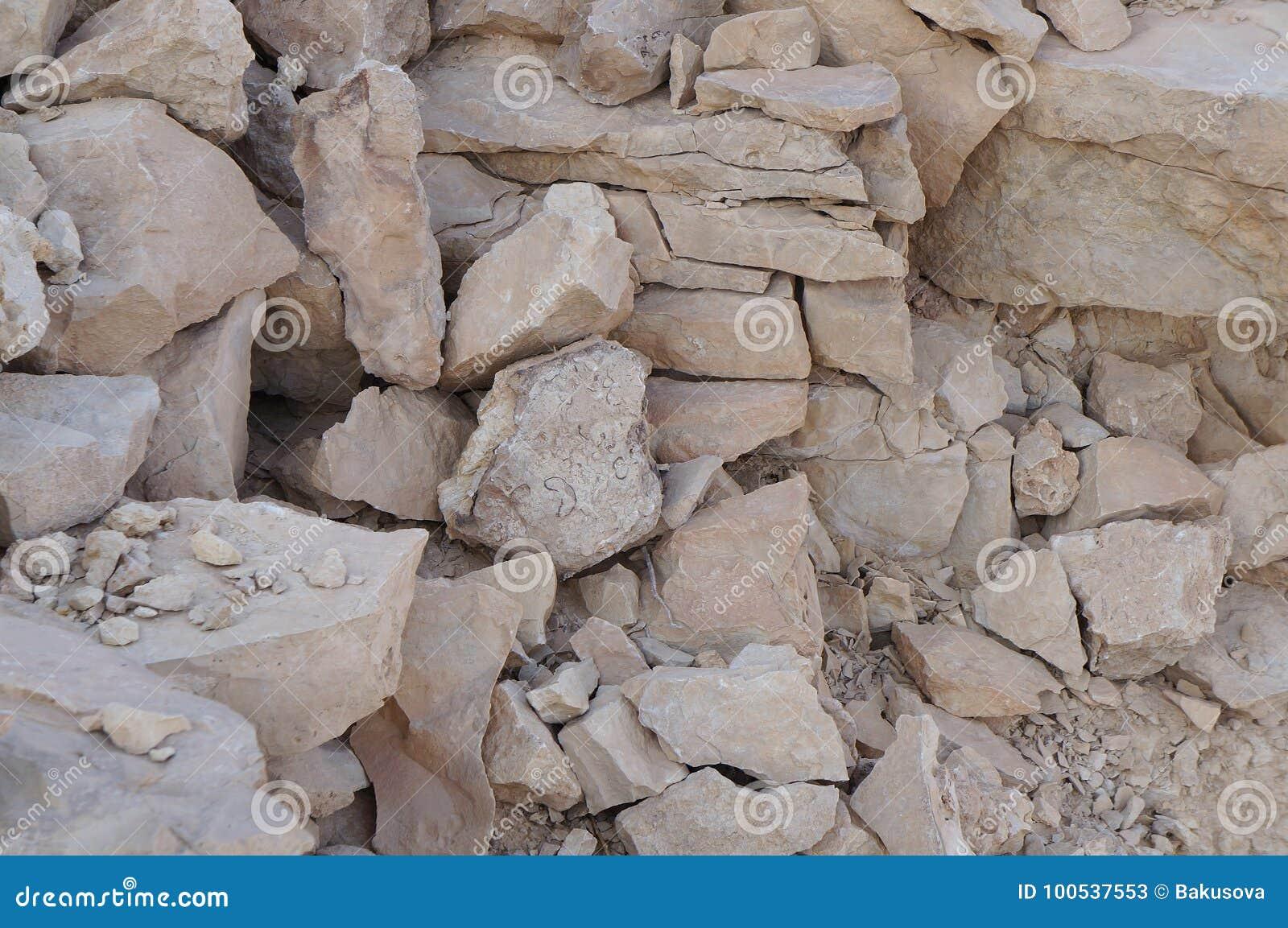 Petrified Seashell Organisms In Ein Qetura Nature Reserve Near Eilat