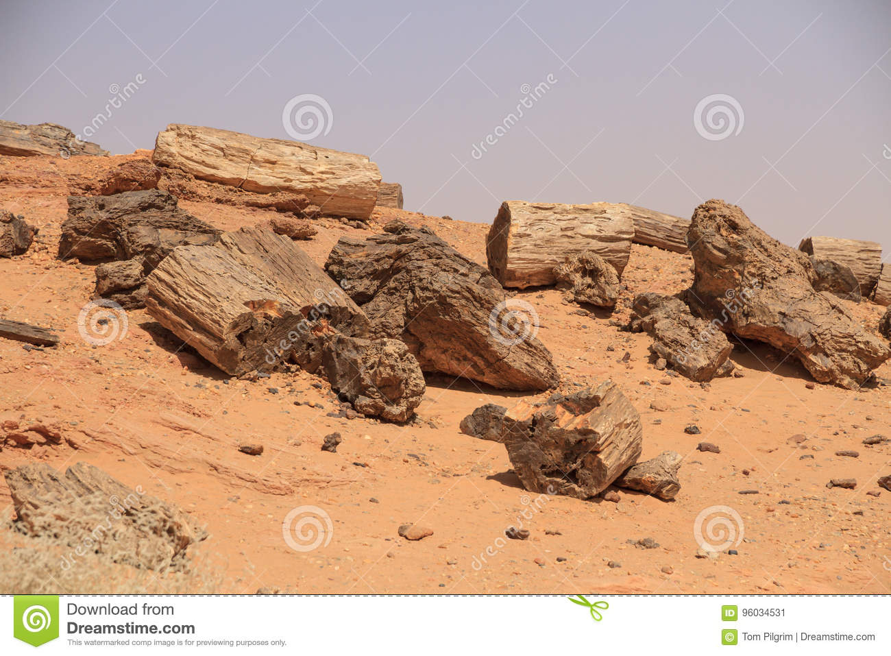 Petrified trees in Sudan