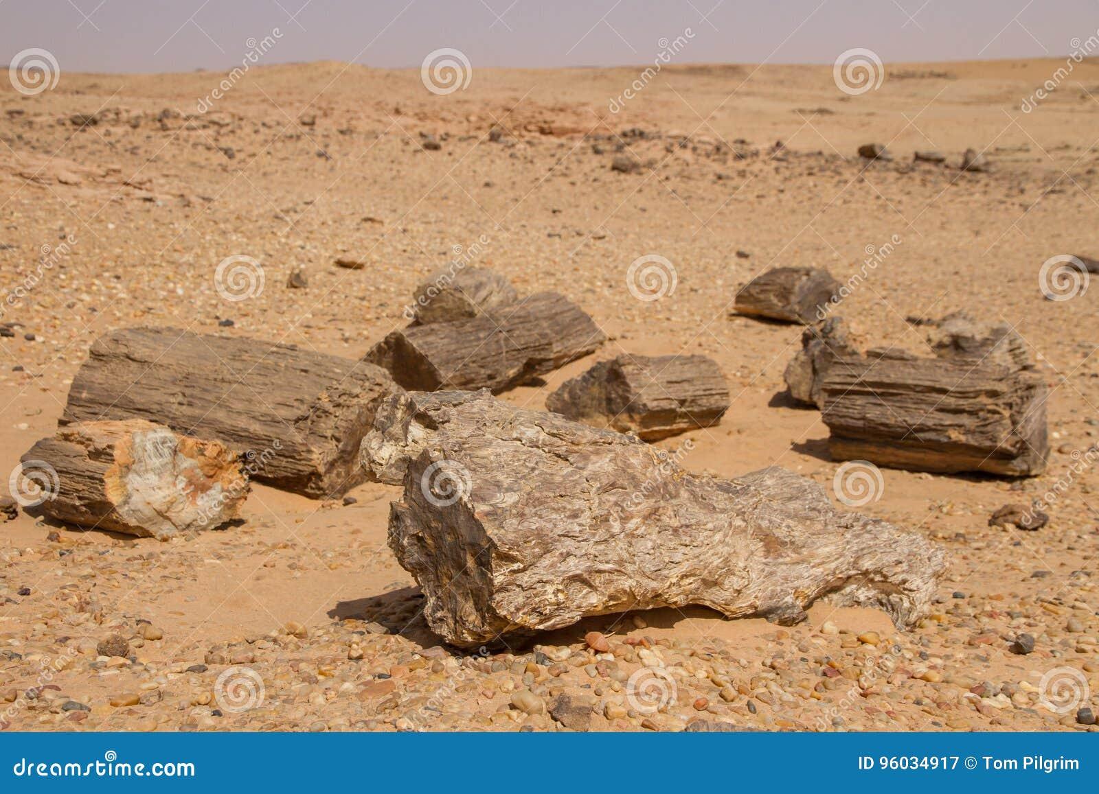 Petrified trees in Sudan,