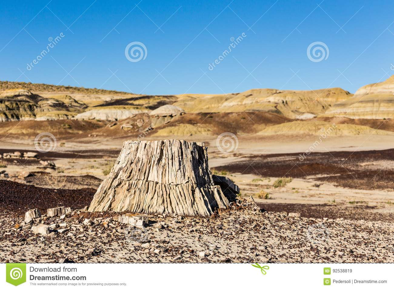 petrified wood tree stump in the desert climate change global