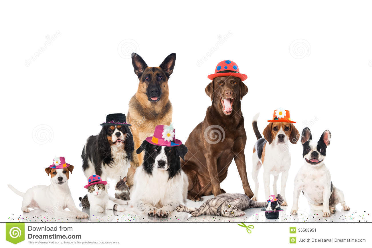 Pets Carnival Stock Image - Image: 36508951