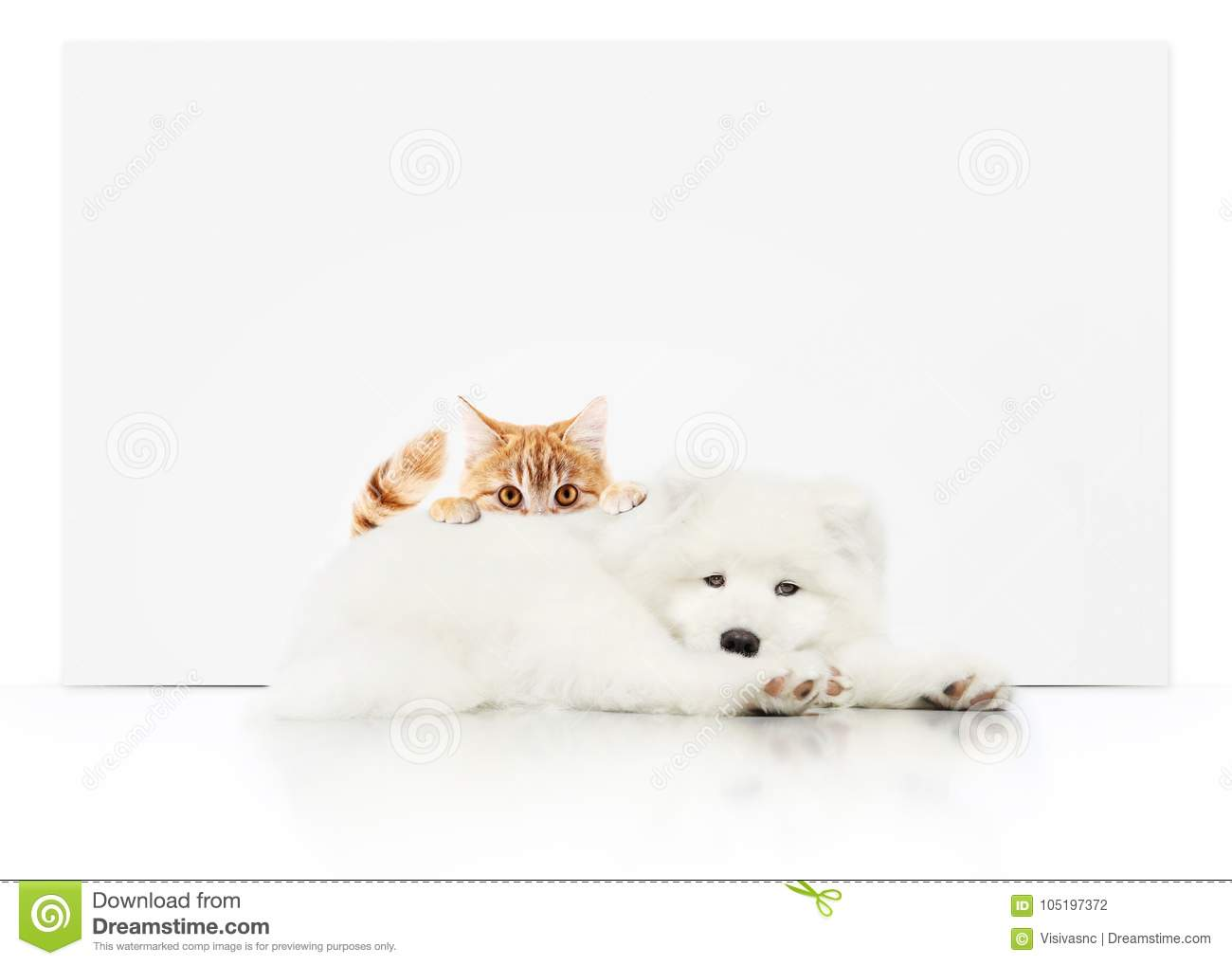 pets store signboard with cat and dog together on white