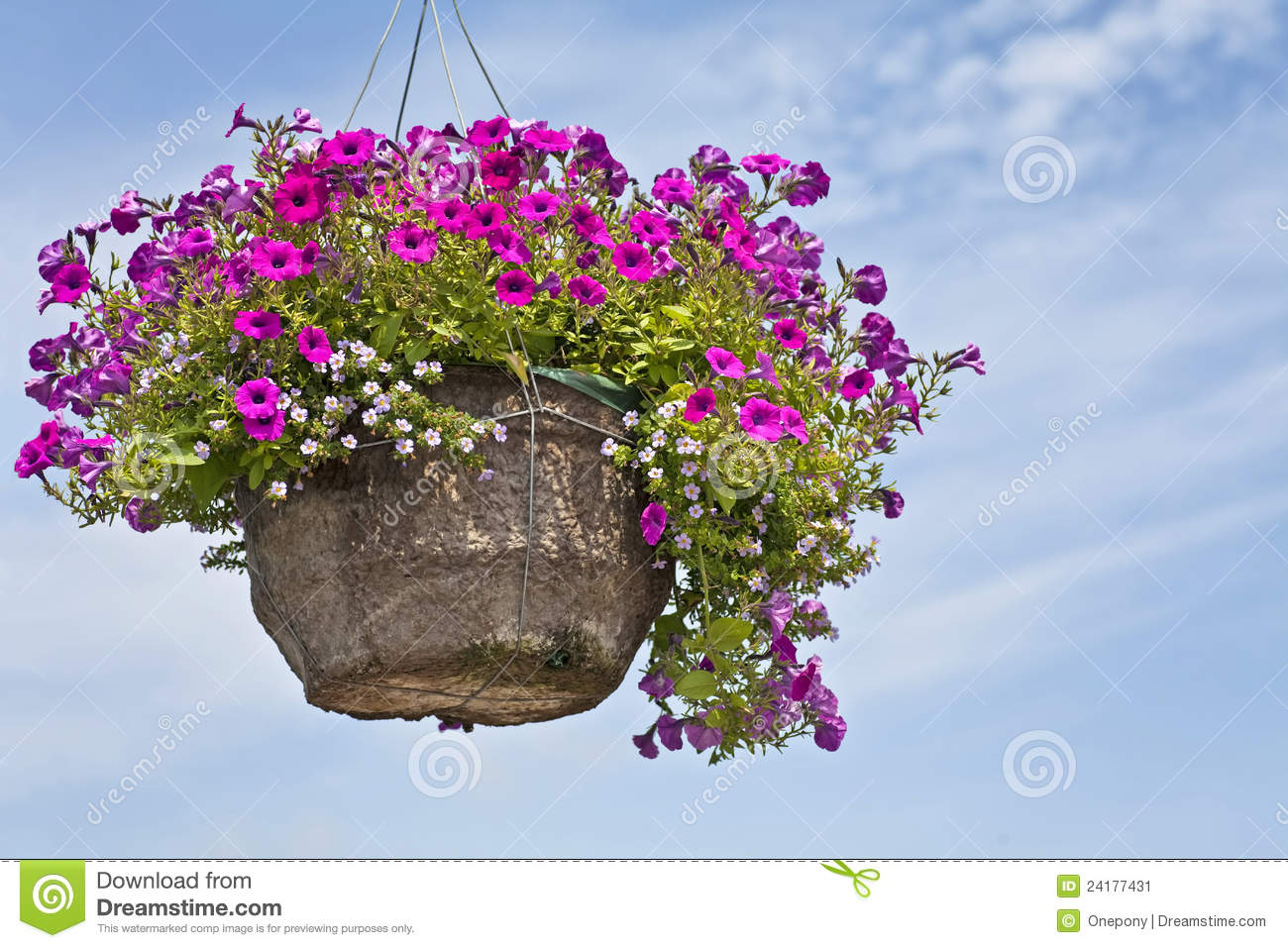Petunia Hanging Basket Stock Photos, Images, & Pictures - 771 Images
