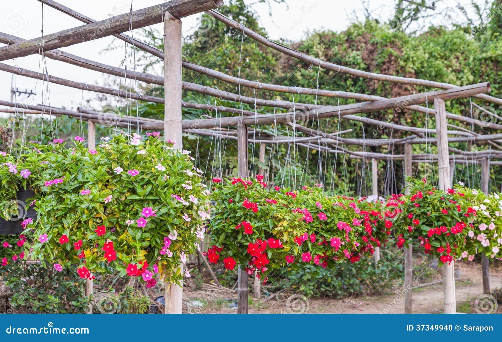 Petunia som hänger på korgar
