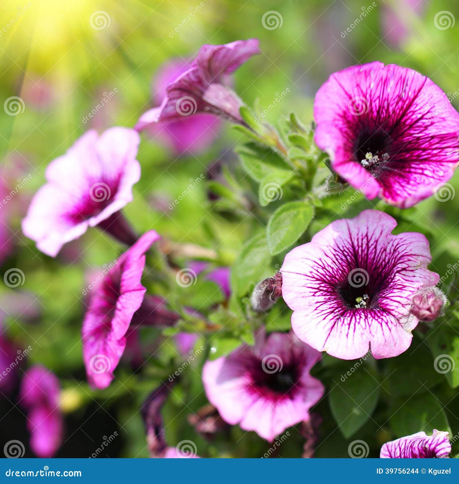Flowers Garden ...