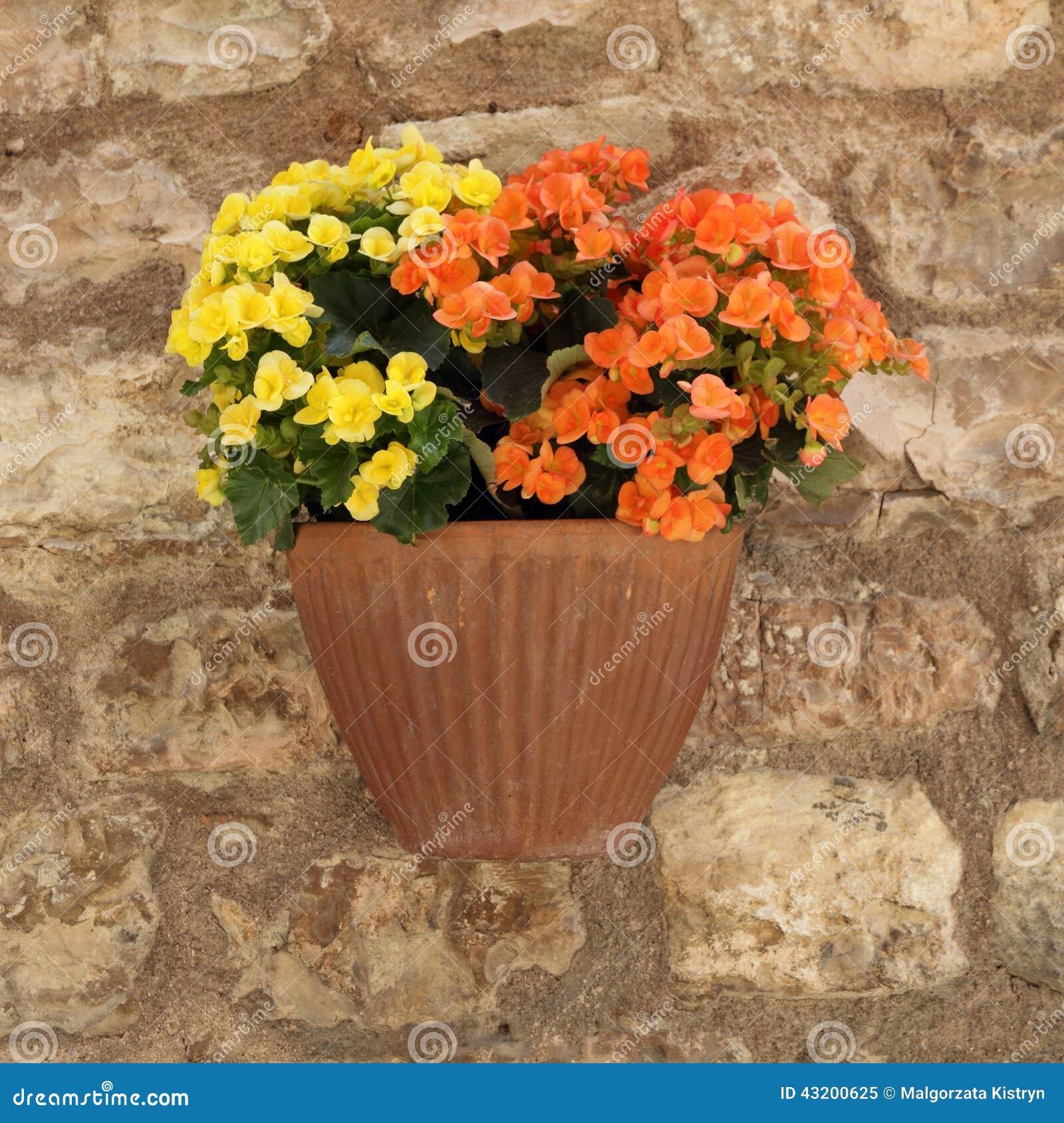 Download Petunior blommar i kruka fotografering för bildbyråer. Bild av utomhus - 43200625