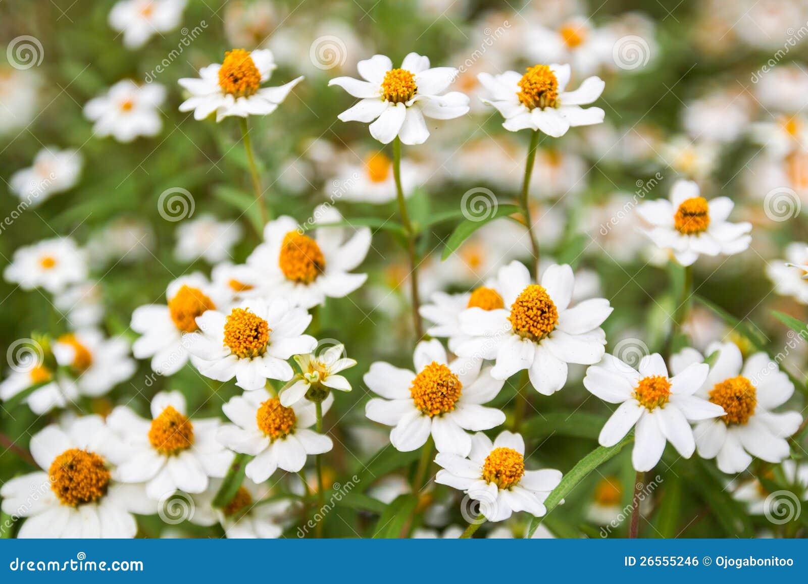 peu de fleur blanche avec le pollen jaune photo stock image 26555246. Black Bedroom Furniture Sets. Home Design Ideas