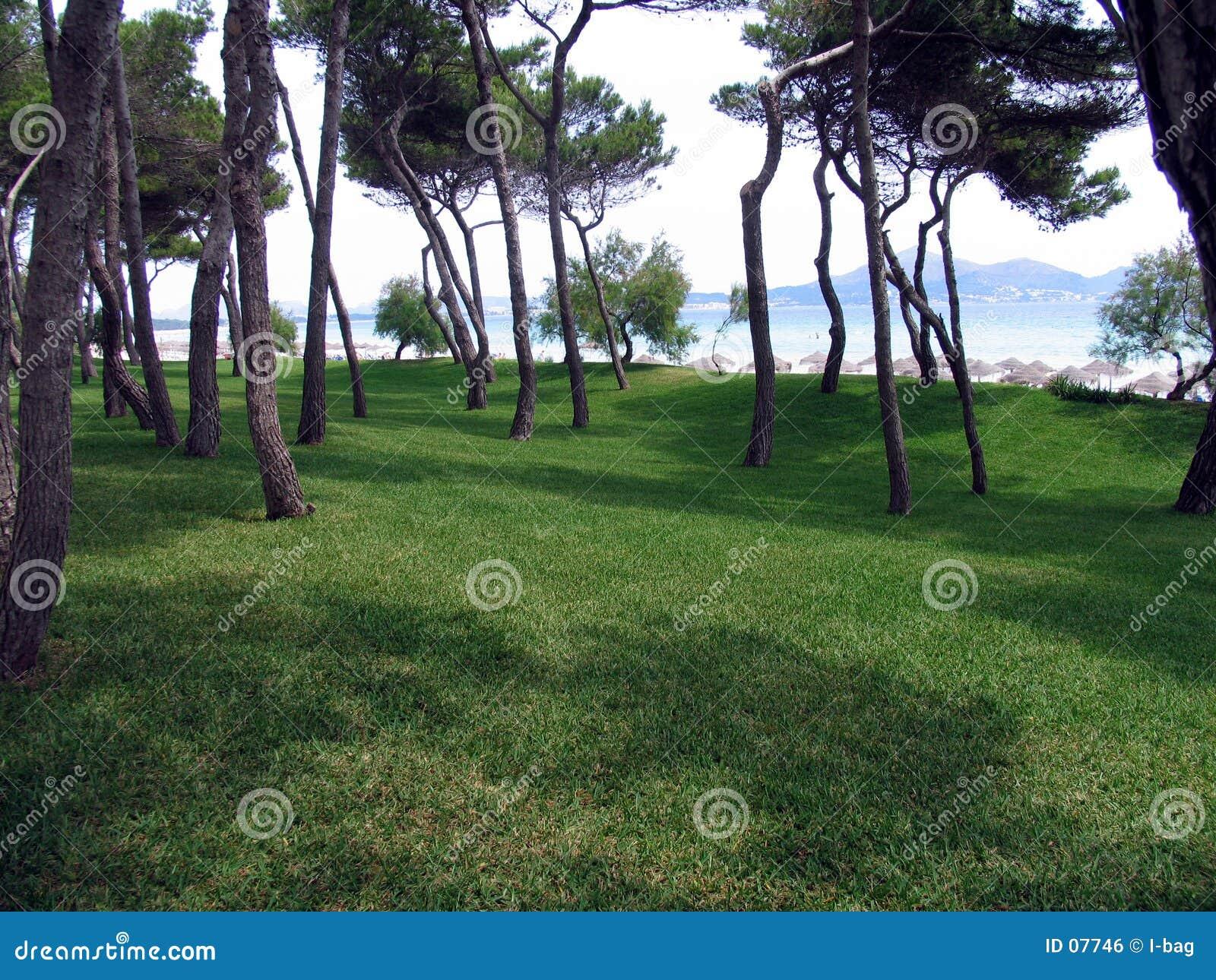 Peu de forêt de plage