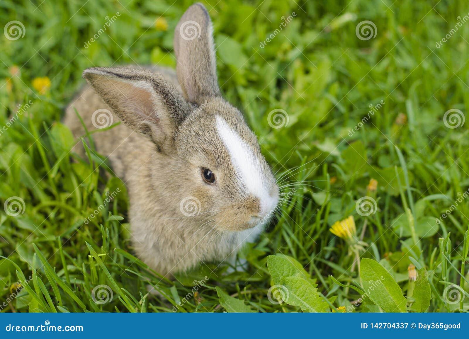 Peu de lapin dans l herbe verte Lapin dans le pré