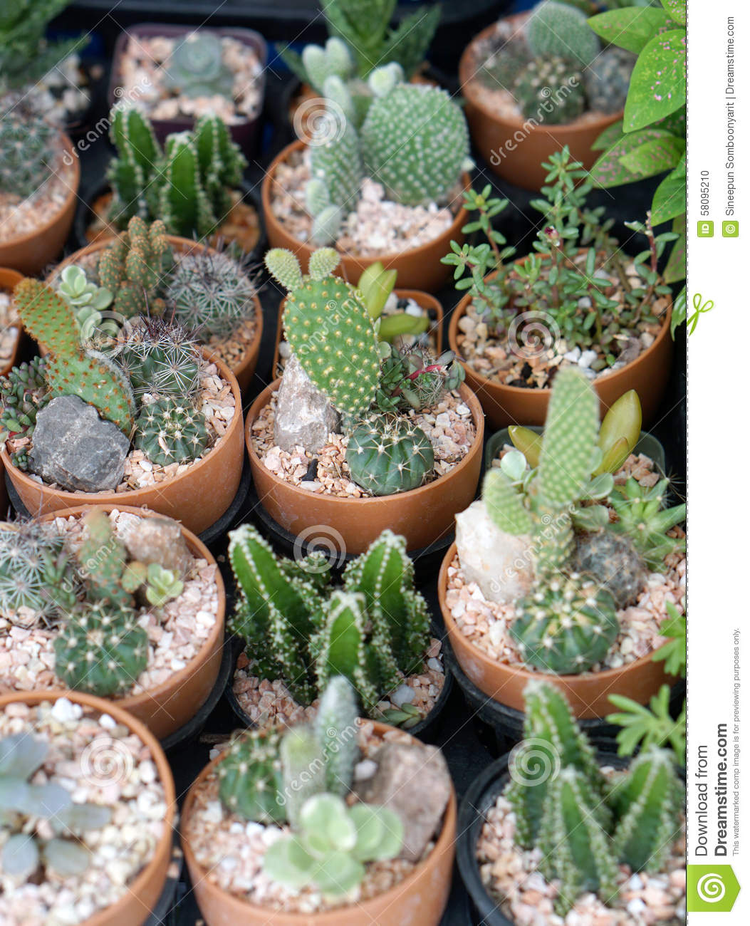 cheap libre de droits with jardin de cactus - Jardn De Cactus