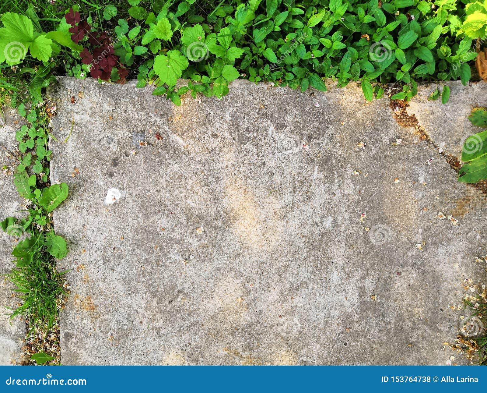 Peu de pousse de fleur se d?veloppe par l au sol urbain d asphalte