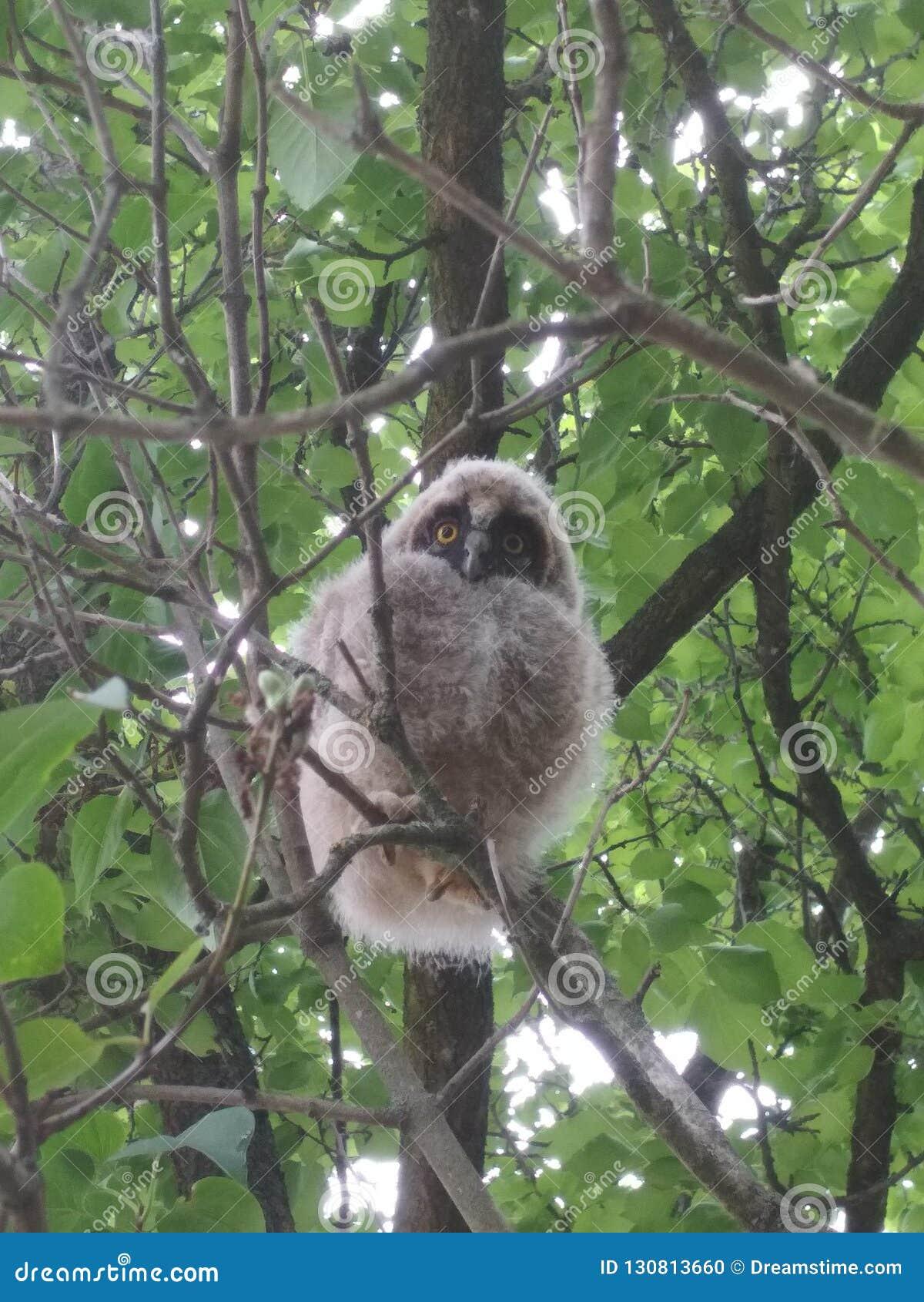 Peu hibou sur l arbre
