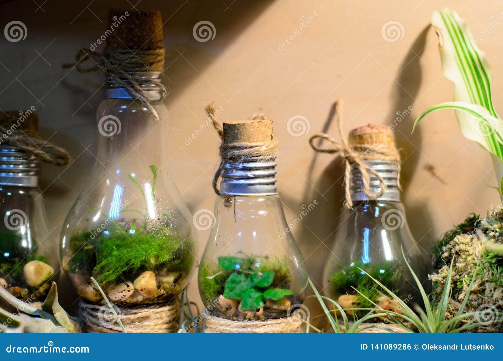 Peu minis-serres d ampoule