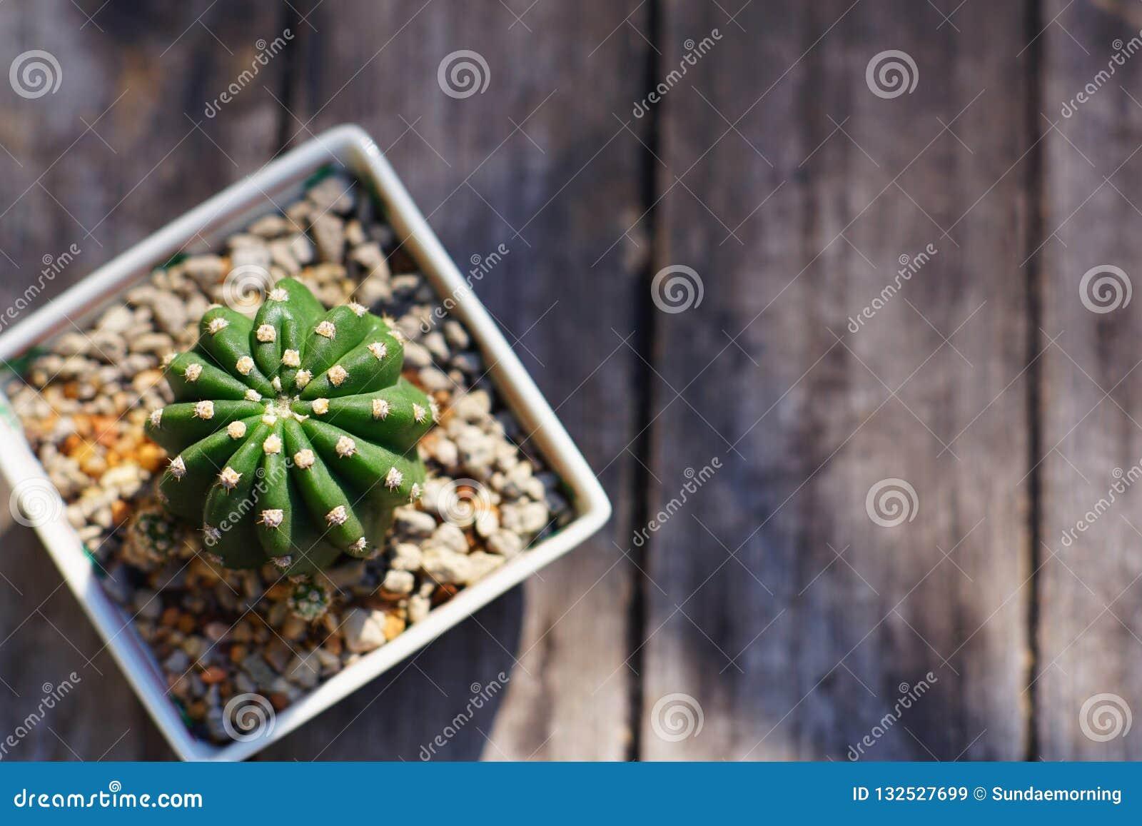 Pot Plante En Bois peu plante en pot de cactus dans le petit pot carré sur la