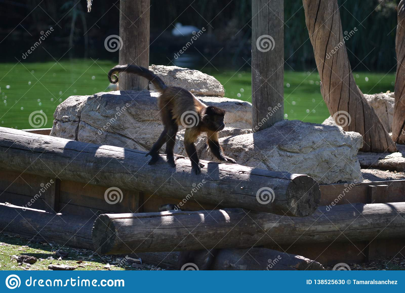Peu singe dans le zoo de Madrid, Espagne