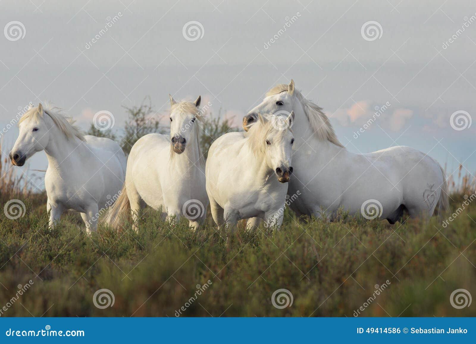 Download Pferd stockfoto. Bild von neigung, freiheit, reinrassig - 49414586