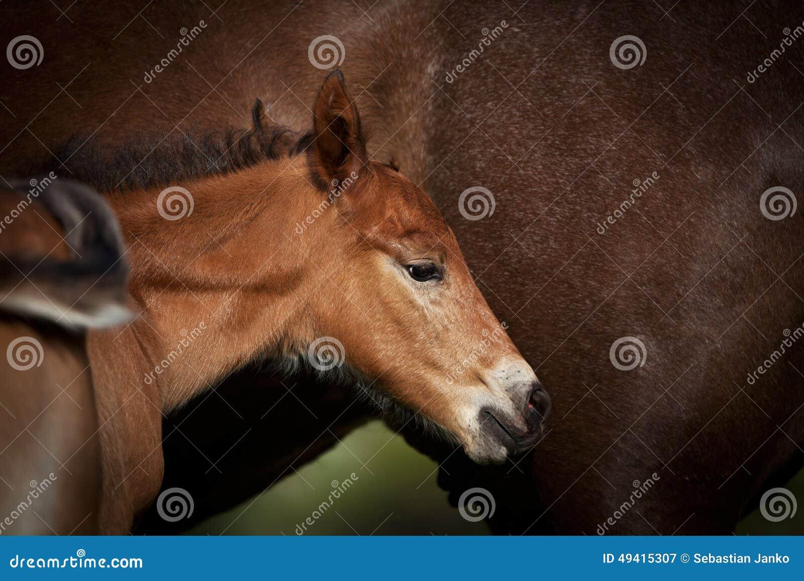 Download Pferd stockbild. Bild von freiheit, reinrassig, herde - 49415307