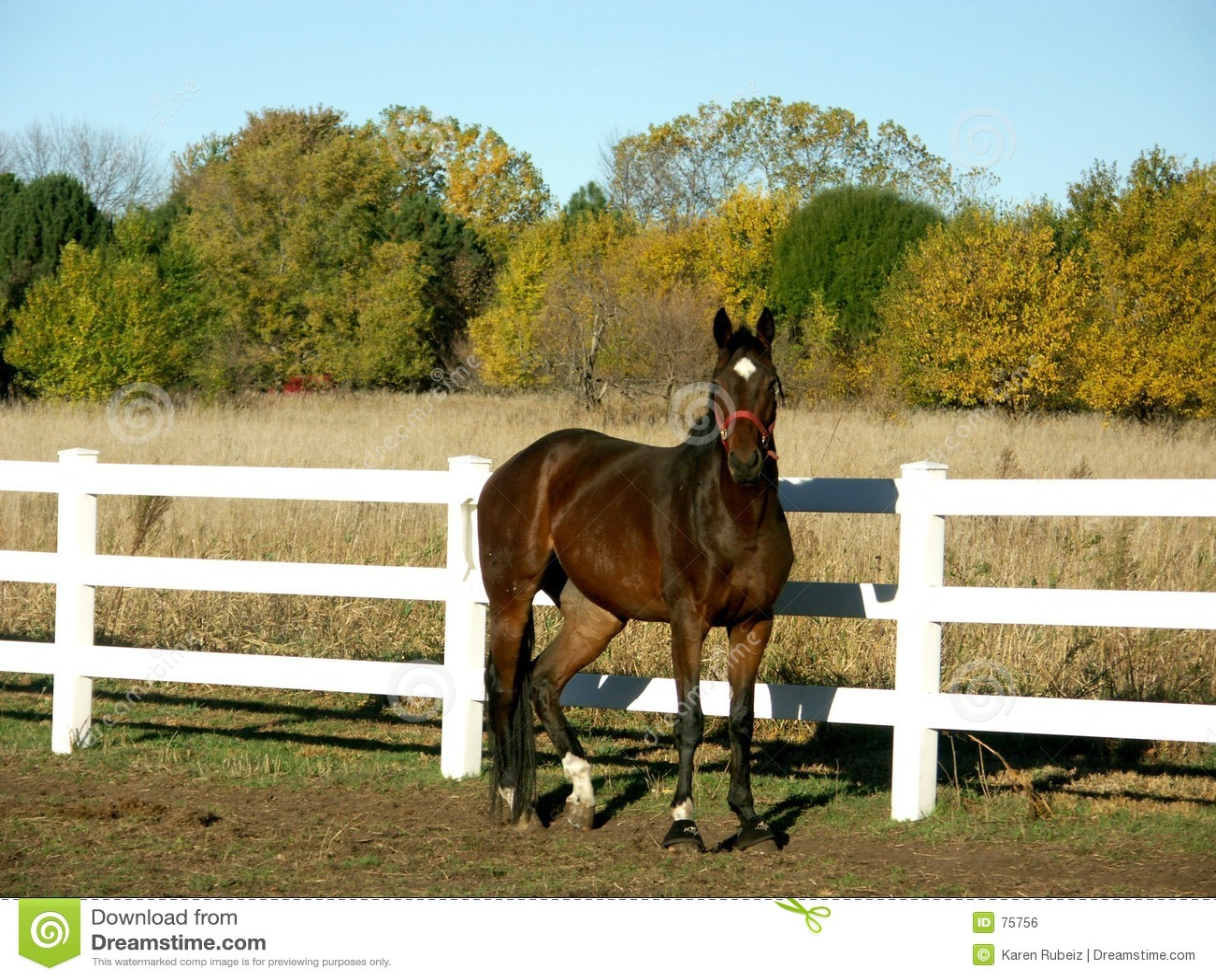 Pferd auf dem Gebiet im Fall