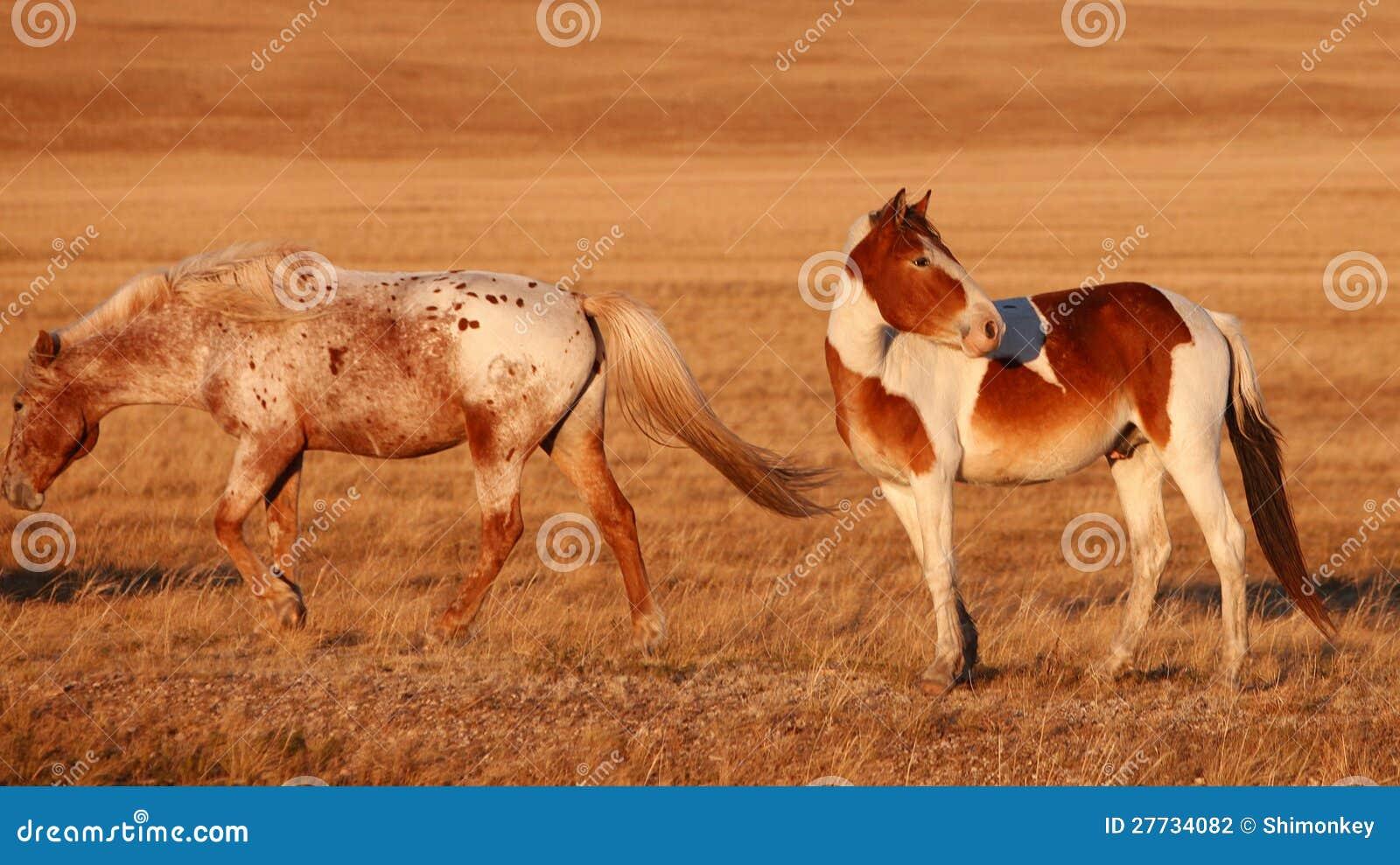 Pferd auf dem Grasland