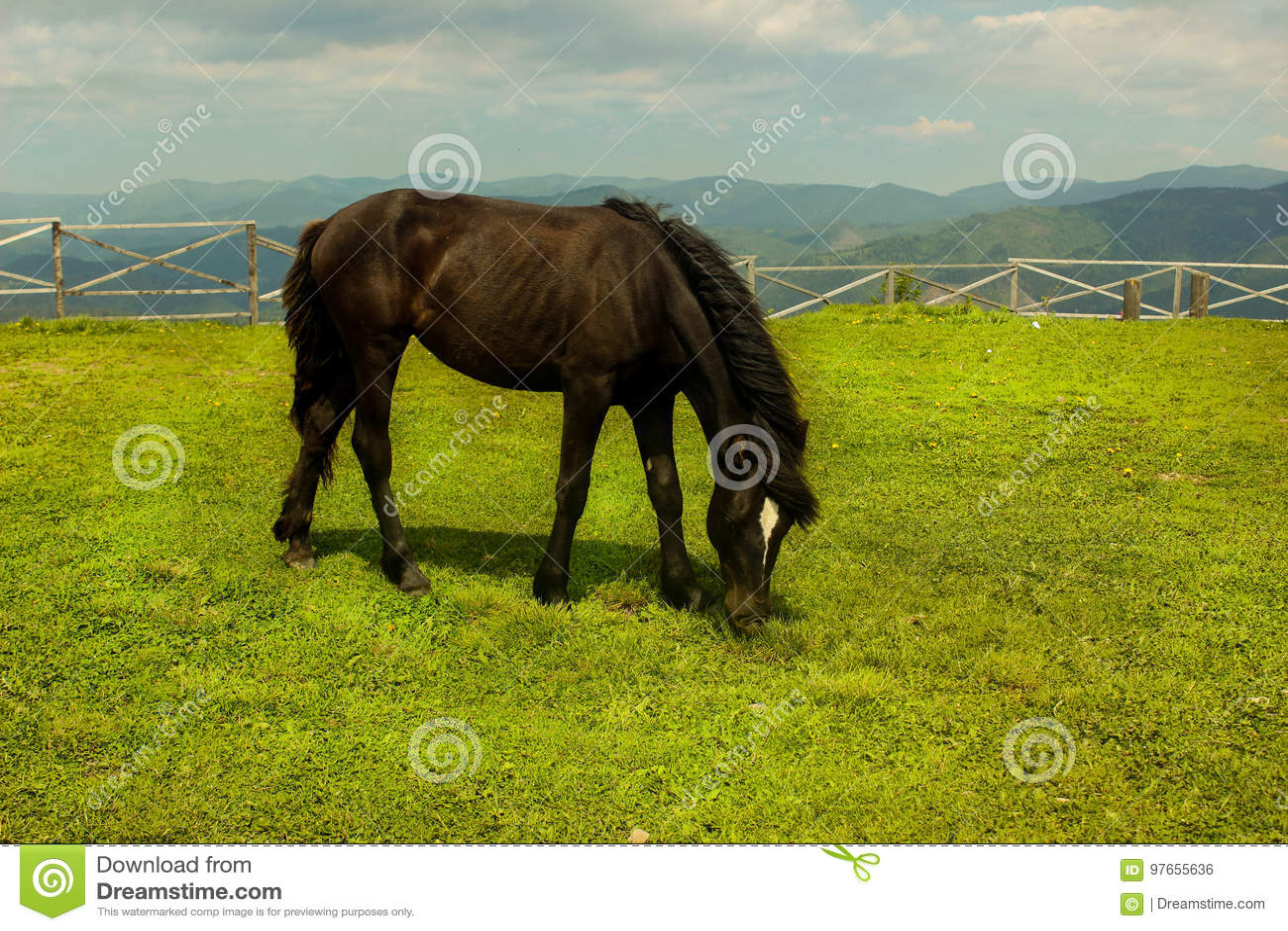 Pferd auf einen Berg