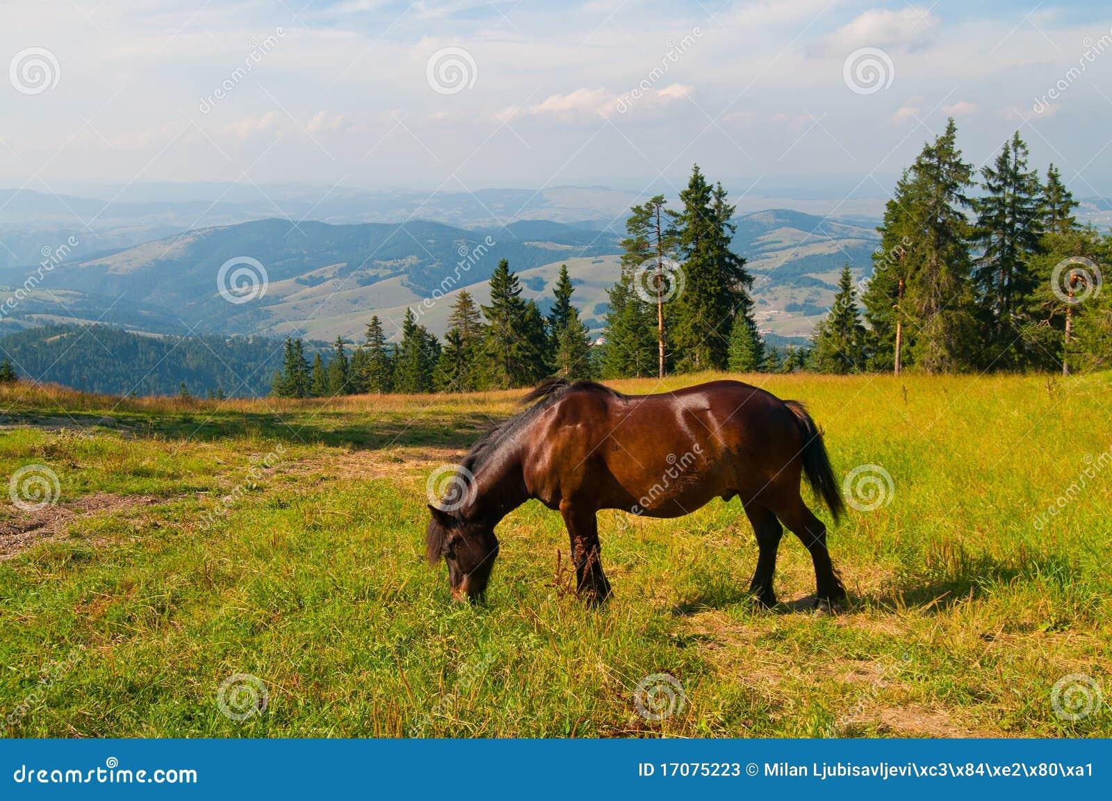 Pferd auf einer Wiese