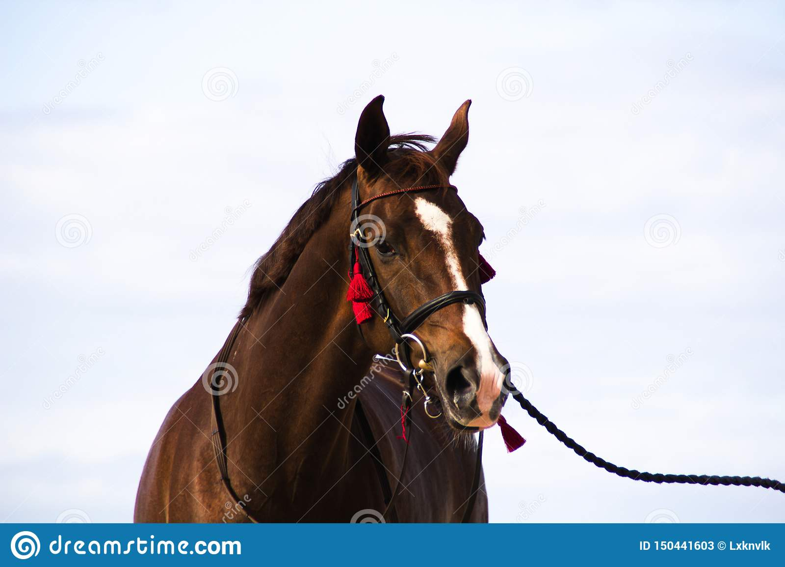 Pferd auf unscharfem Hintergrund