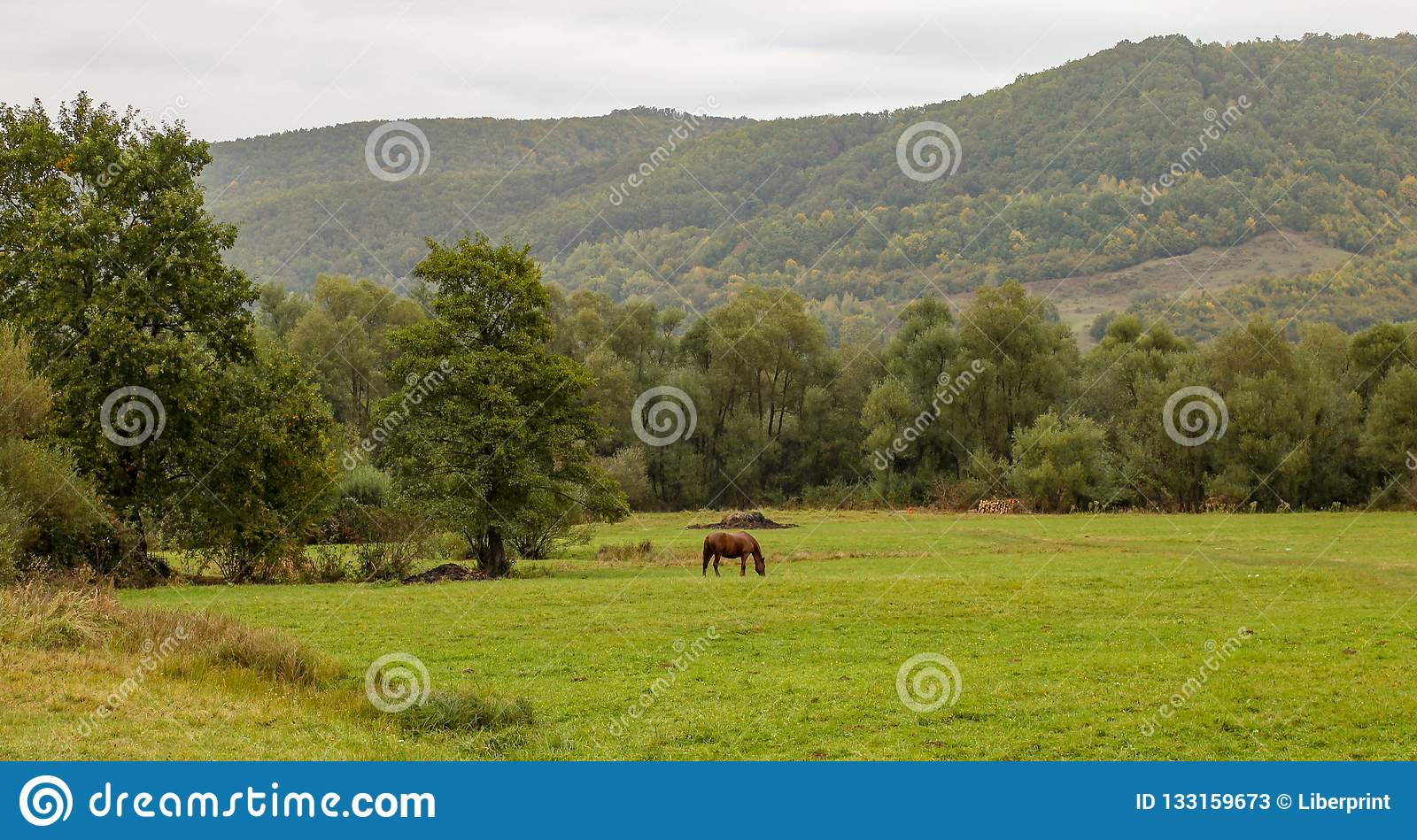Pferd auf Wiese mit Karpatenberg im Hintergrund