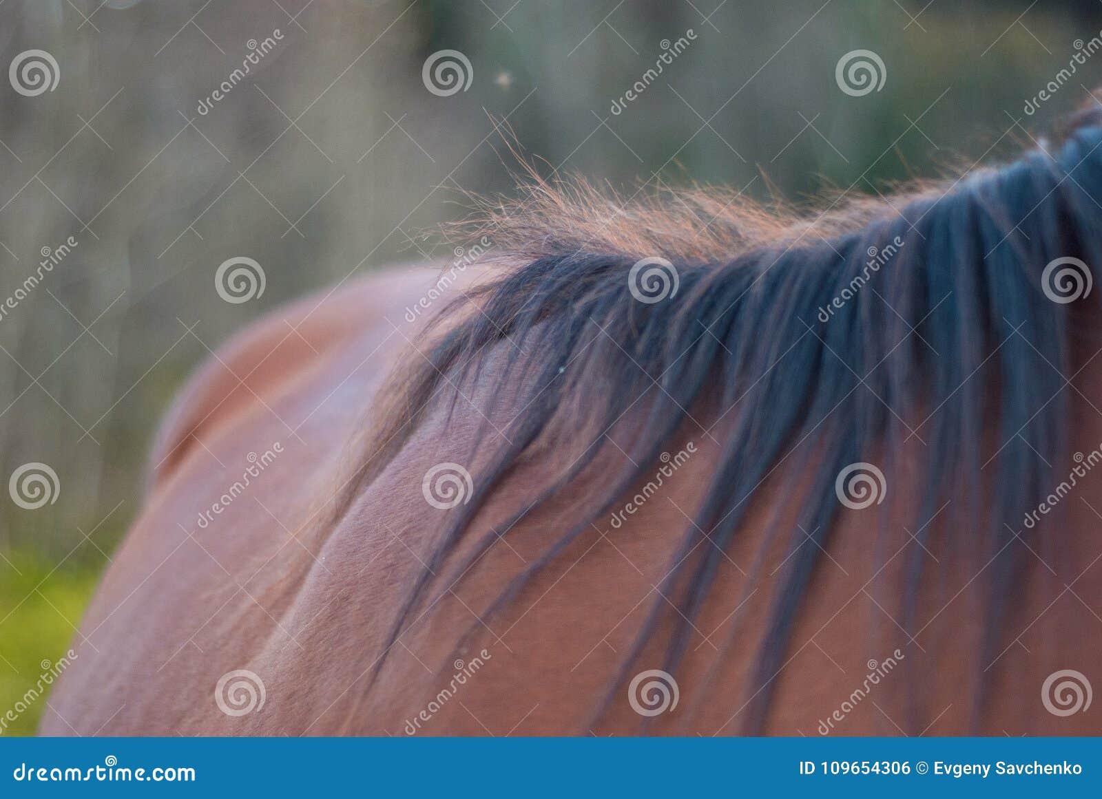 Pferd, das in einer Wiese weiden lässt