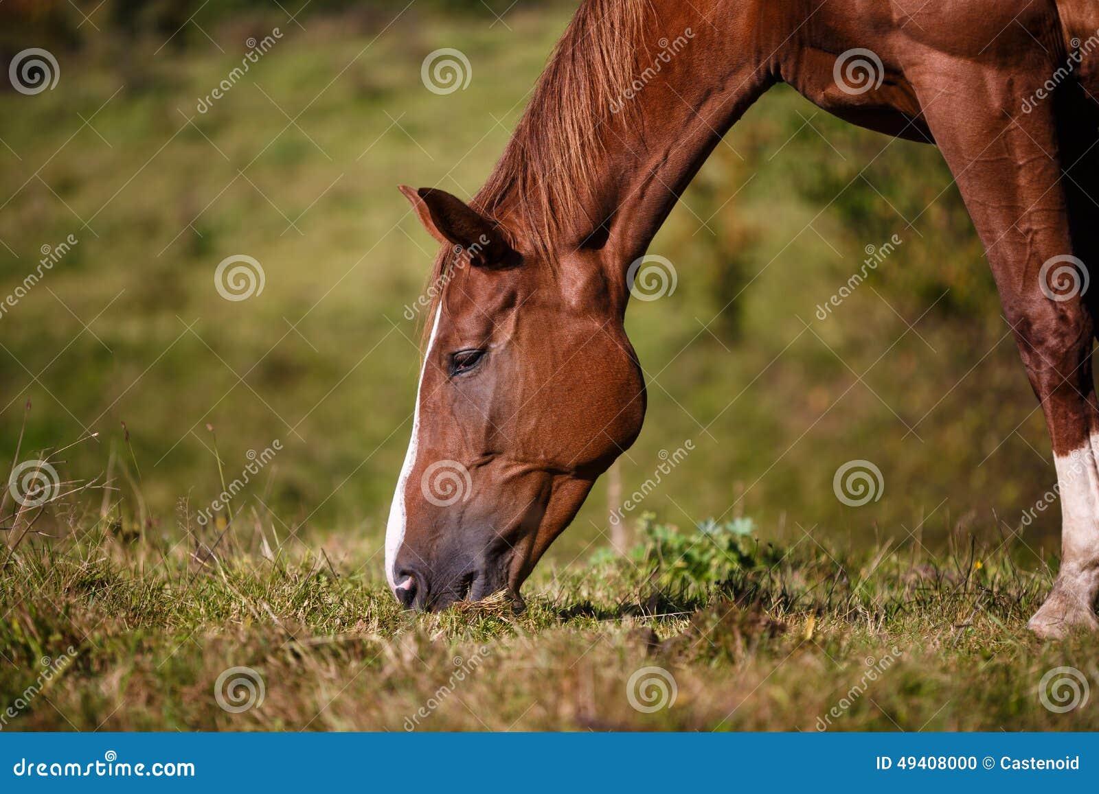 Download Pferd, das Gras isst stockfoto. Bild von auge, nave, säugetier - 49408000