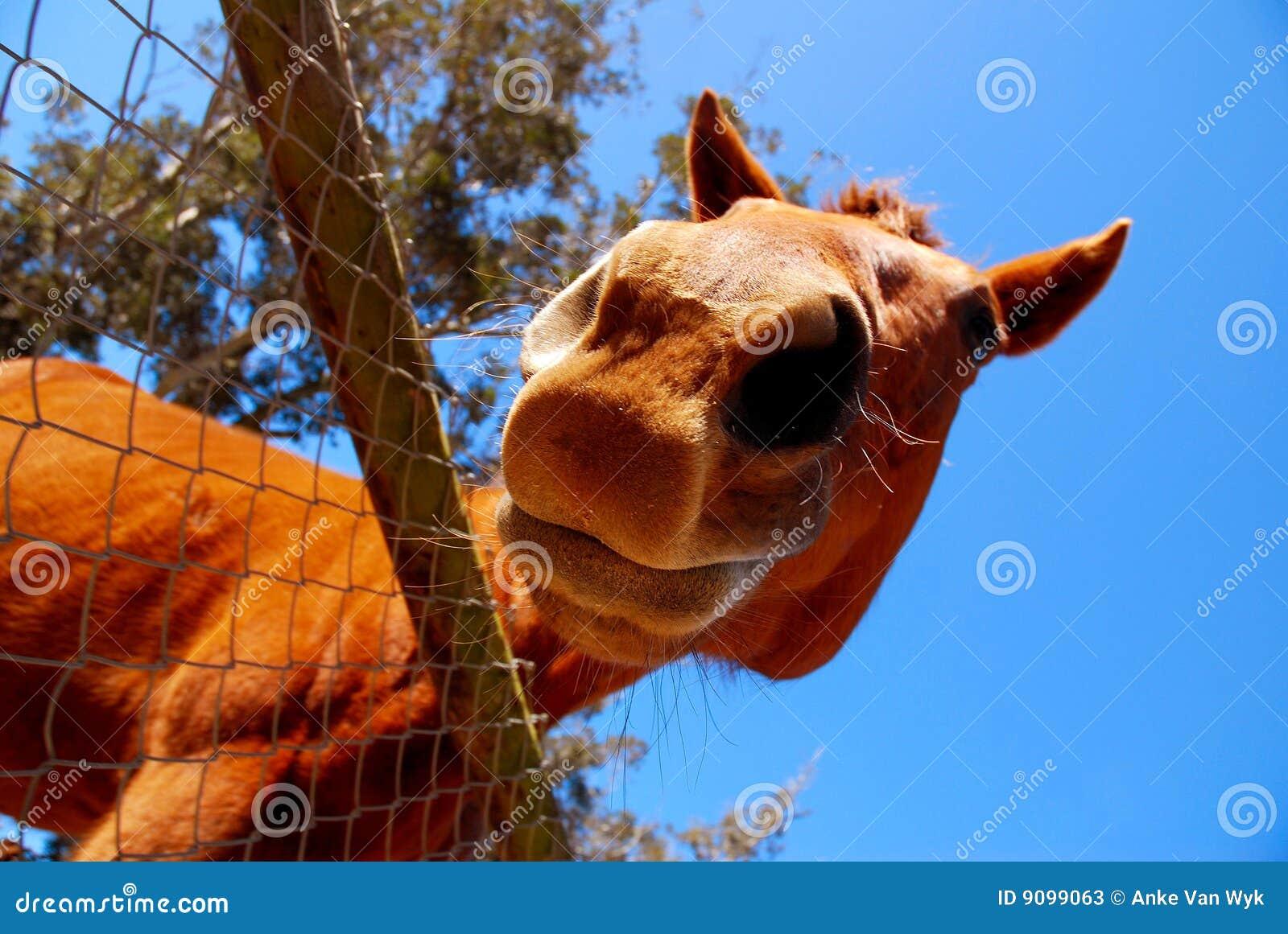 Pferd, das unten schaut