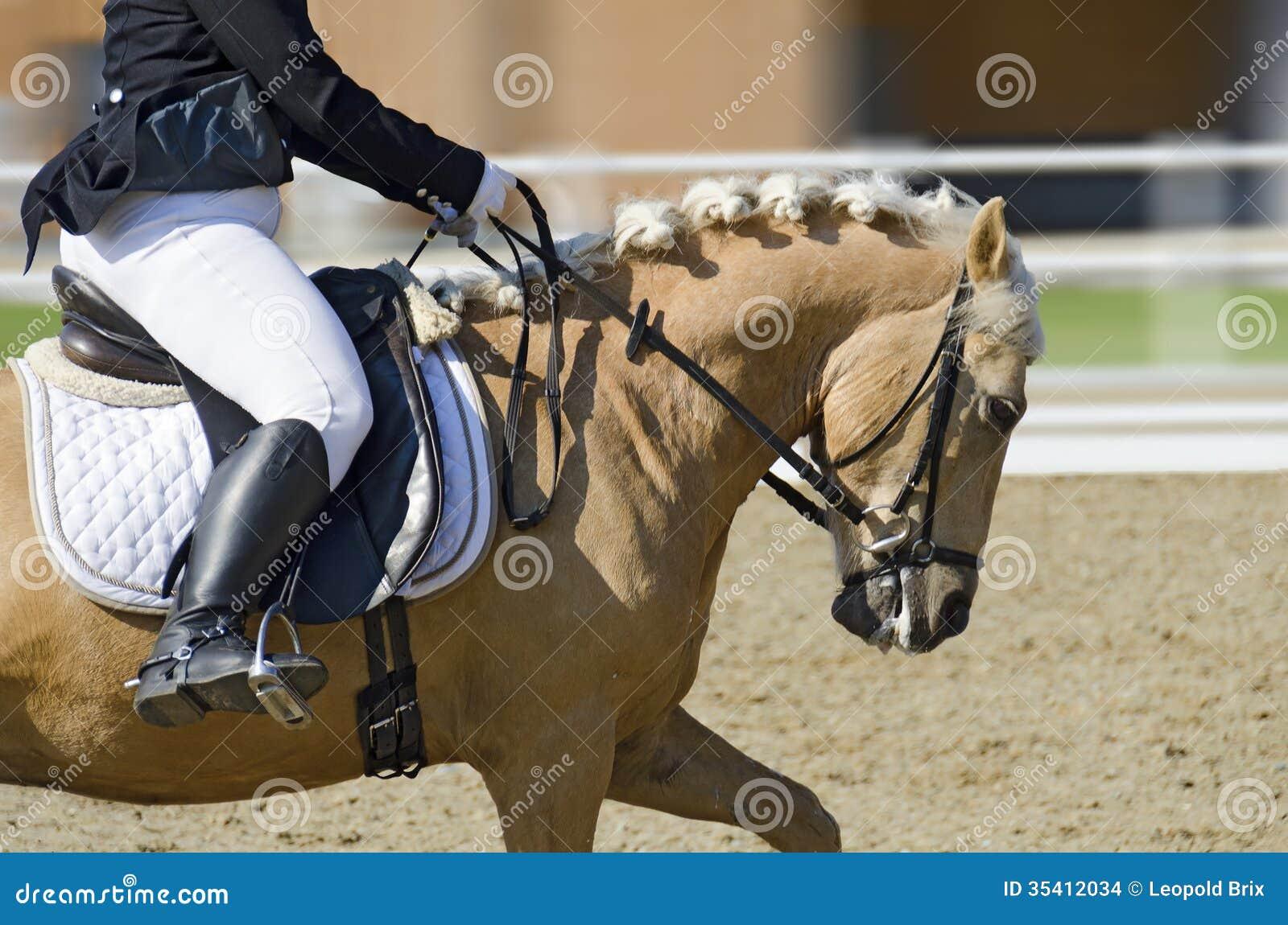 Pferd in der Bewegung auf einem Dressurreitenbereich